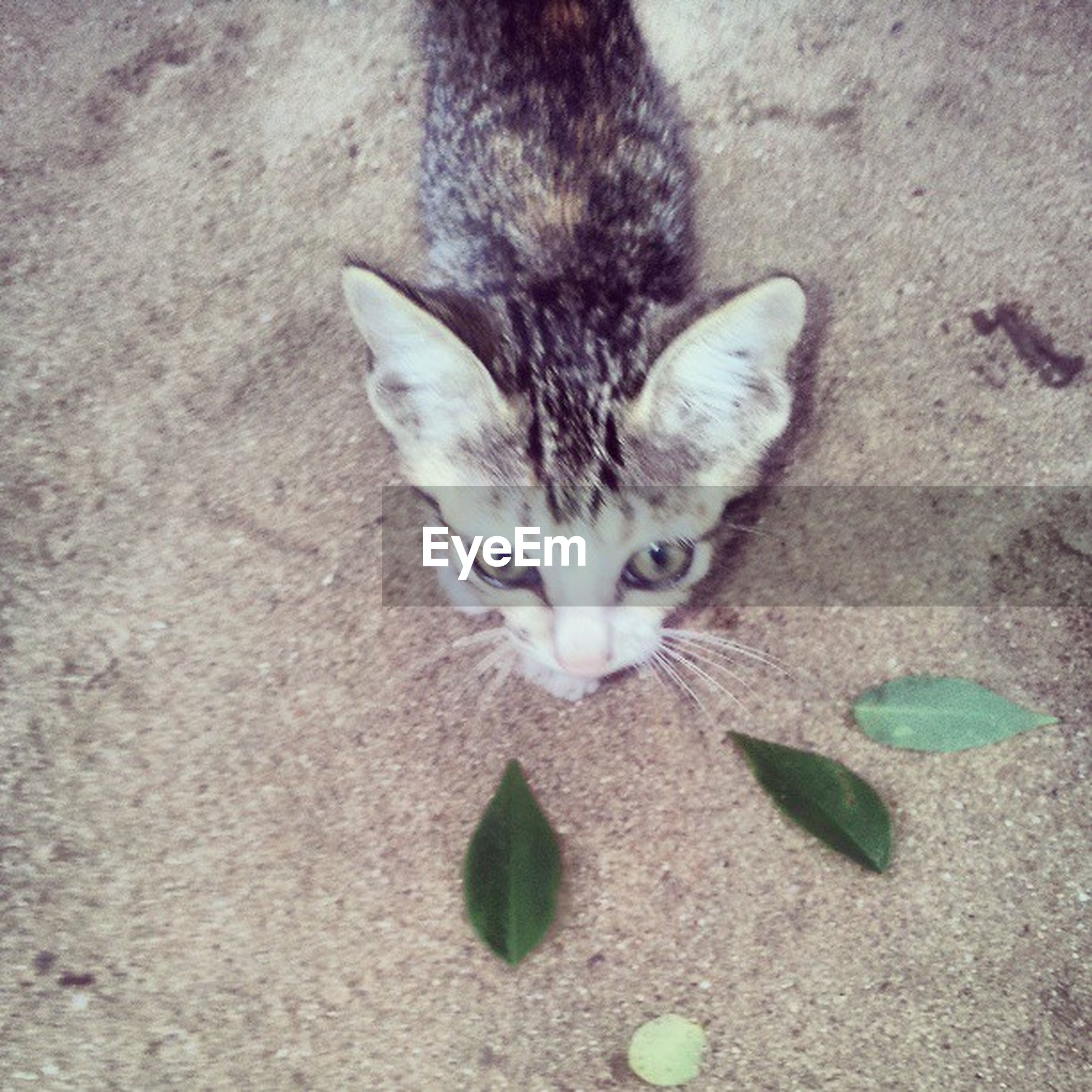 domestic cat, animal themes, cat, one animal, domestic animals, pets, feline, mammal, whisker, portrait, looking at camera, high angle view, alertness, close-up, no people, street, day, relaxation, kitten, outdoors