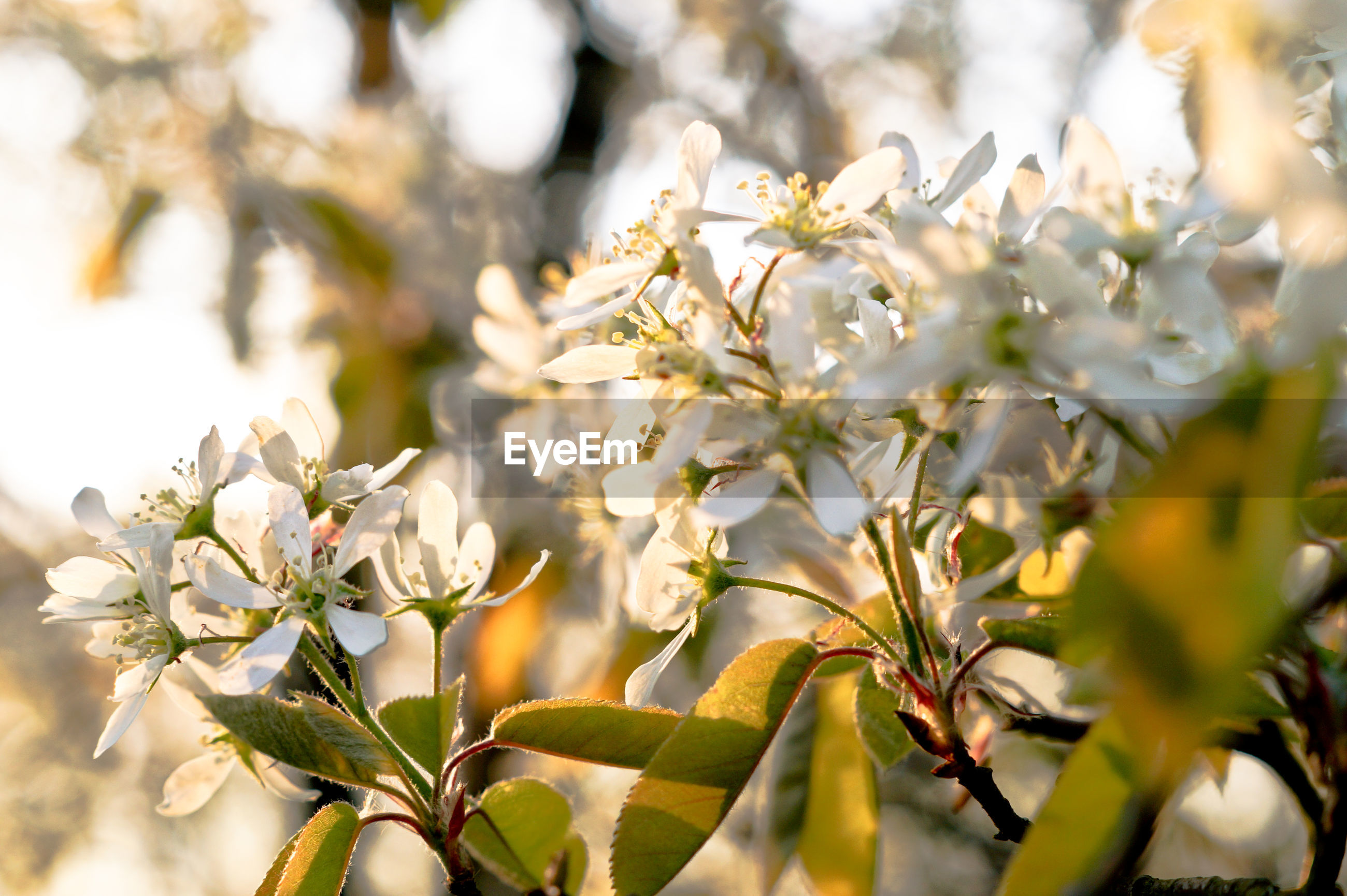 CLOSE UP OF WHITE FLOWERING PLANT