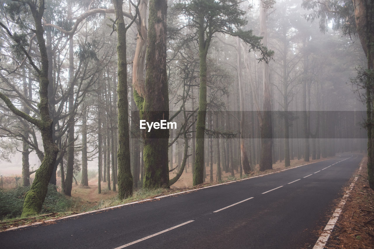 tree, road, direction, plant, symbol, transportation, fog, the way forward, road marking, marking, sign, nature, tree trunk, trunk, forest, no people, day, tranquility, land, diminishing perspective, outdoors, woodland, dividing line, treelined