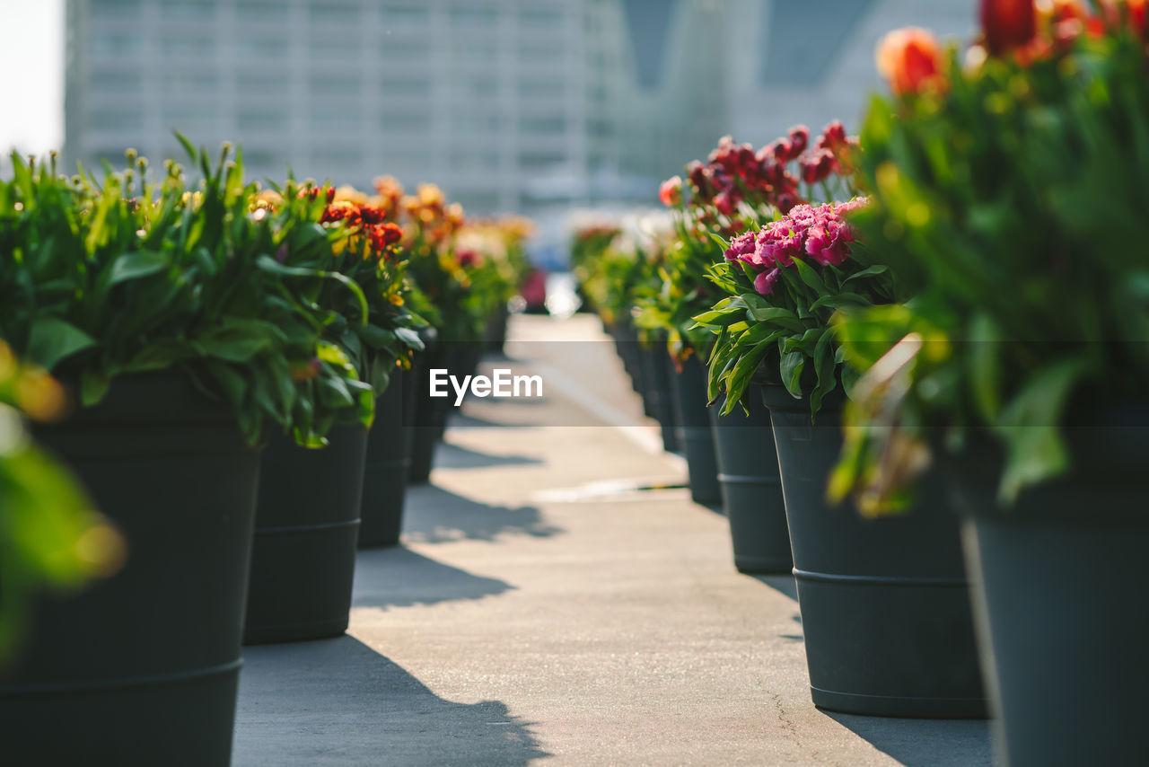 Flower Pots Arranged In Row On Pedestrian Zone
