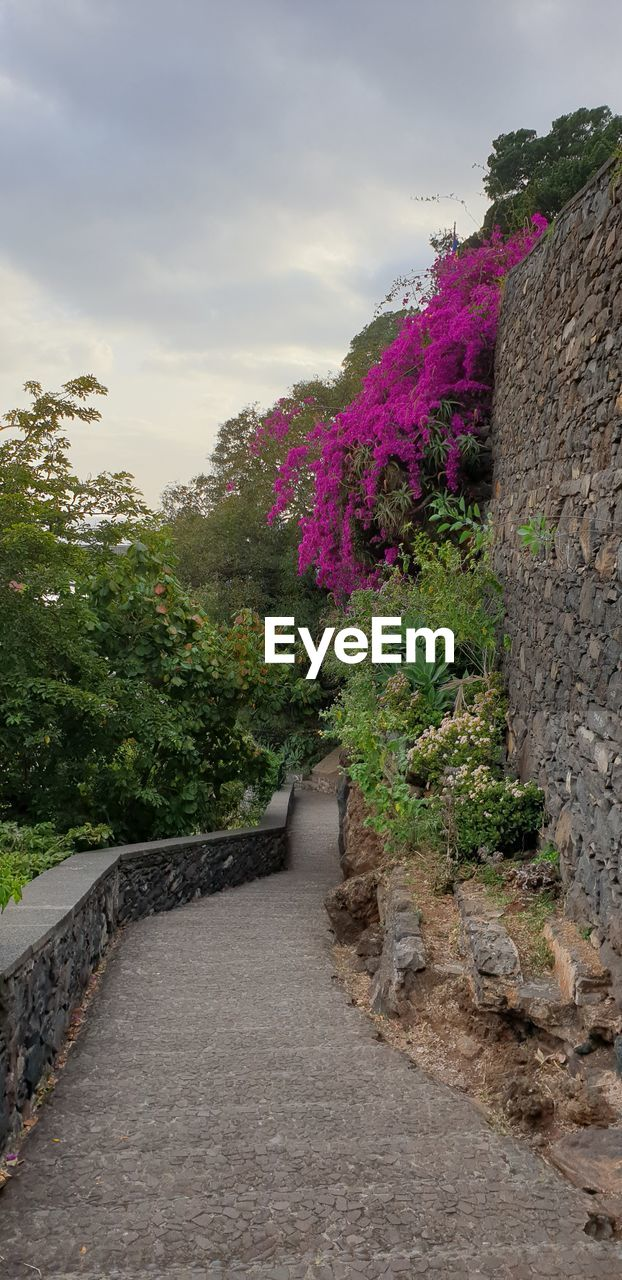 sky, plant, the way forward, direction, nature, growth, tree, cloud - sky, footpath, beauty in nature, no people, flowering plant, flower, diminishing perspective, tranquility, outdoors, tranquil scene, scenics - nature, road, non-urban scene, stone wall