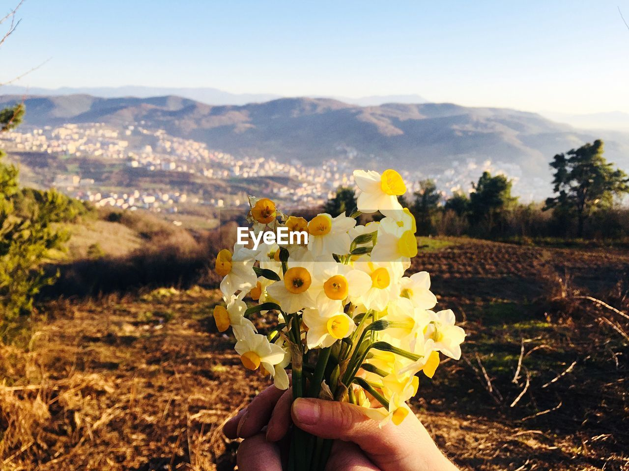 flower, nature, field, landscape, human hand, beauty in nature, outdoors, one person, focus on foreground, mountain, holding, day, plant, agriculture, yellow, real people, rural scene, growth, human body part, sunlight, sky, sunflower, fragility, scenics, close-up, freshness, flower head, clear sky, people