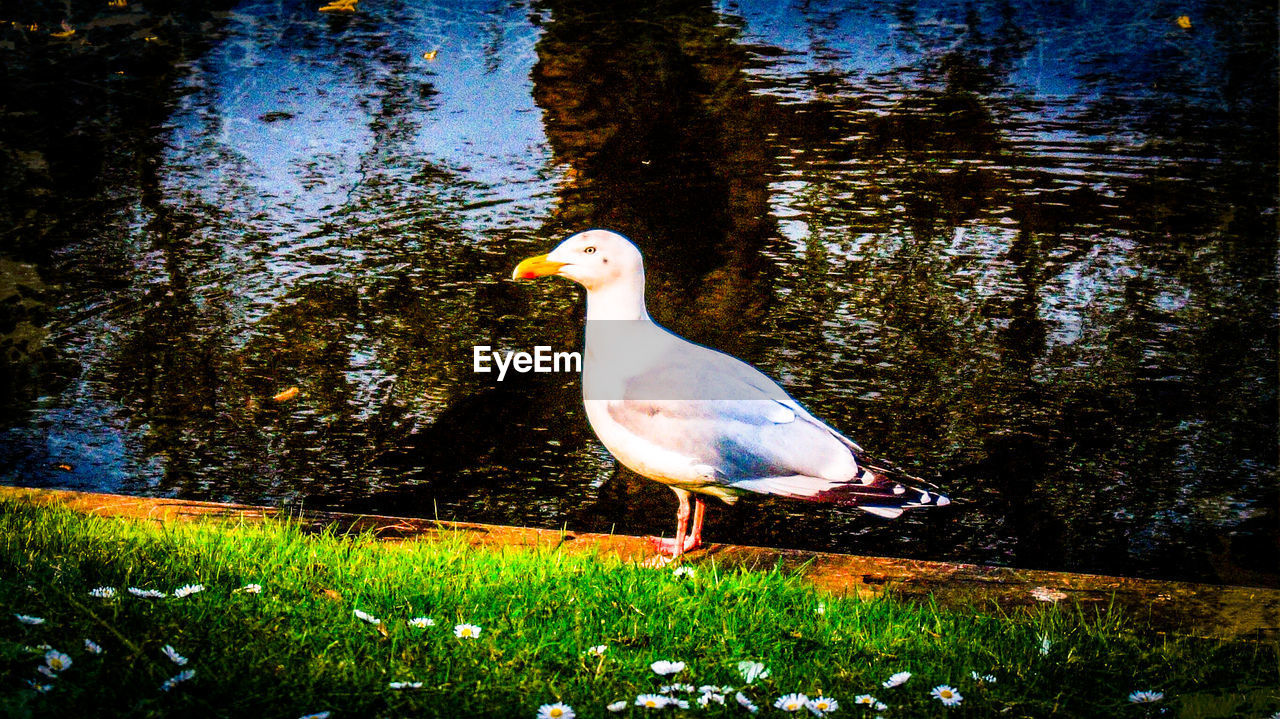 animal themes, animal, bird, animals in the wild, animal wildlife, vertebrate, one animal, plant, water, nature, perching, grass, lake, tree, no people, day, outdoors, land, white color
