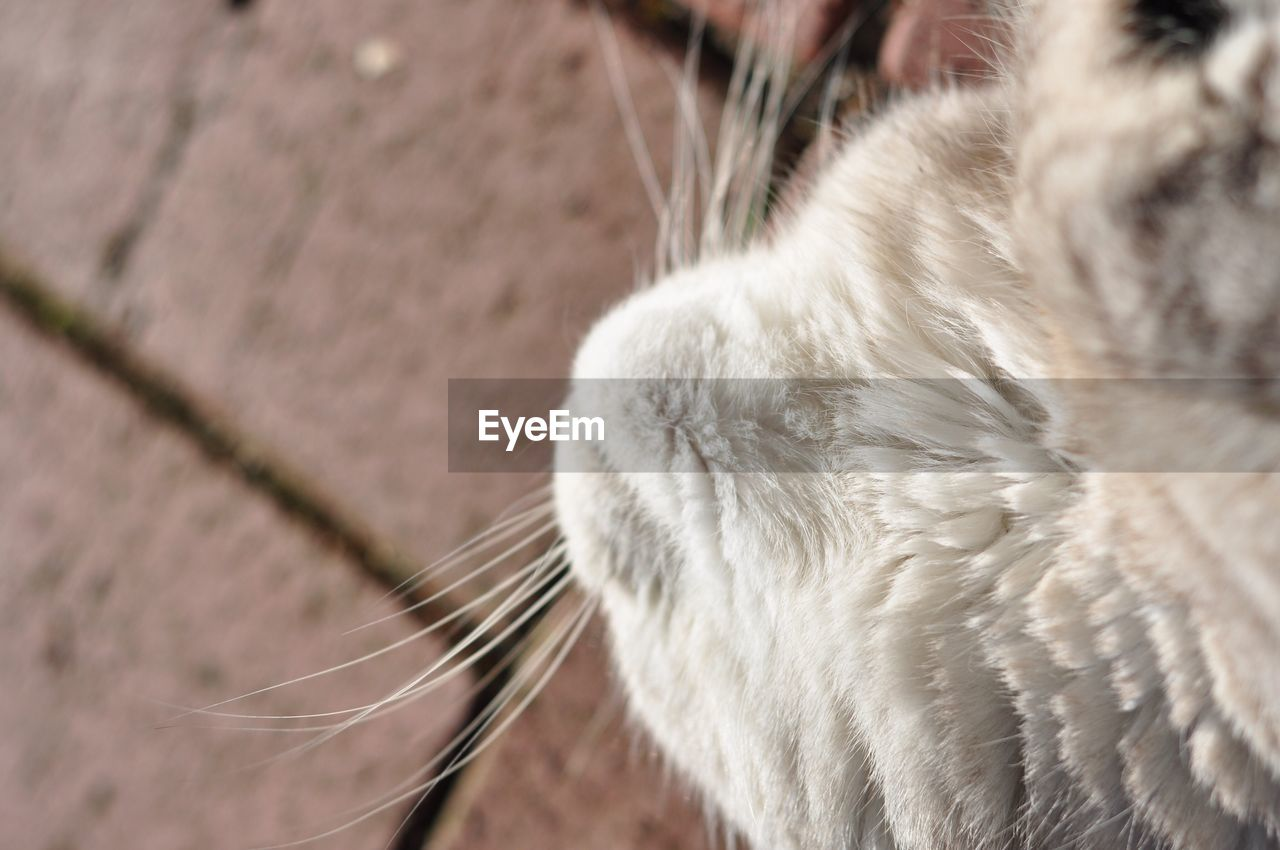 domestic animals, animal themes, one animal, pets, mammal, domestic cat, close-up, feline, day, indoors, no people