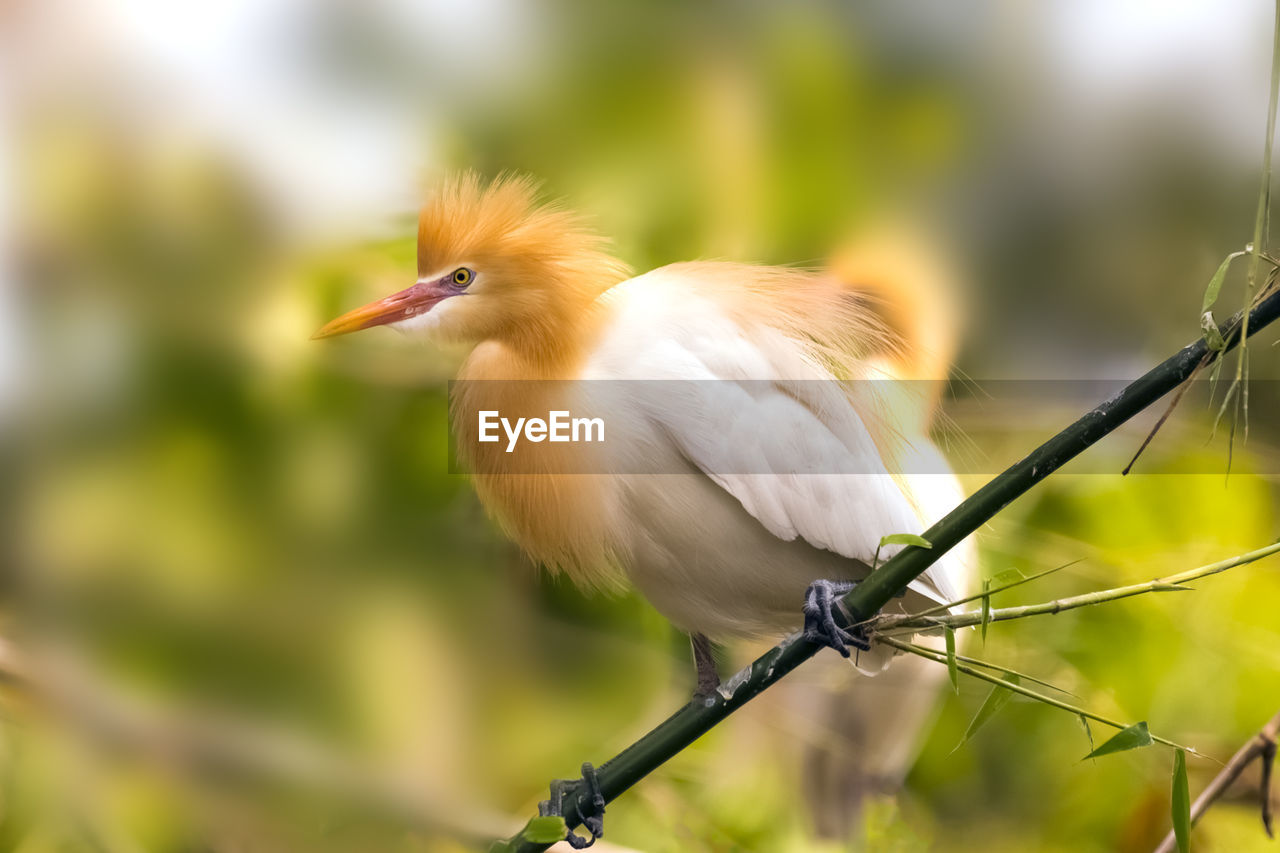 bird, animal themes, vertebrate, animal, one animal, animal wildlife, animals in the wild, perching, no people, selective focus, nature, day, close-up, focus on foreground, outdoors, plant, side view, beauty in nature, zoology, green color
