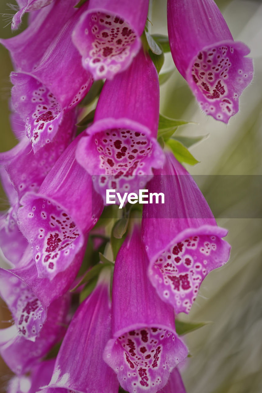 purple, beauty in nature, pink color, petal, flower, no people, close-up, nature, fragility, growth, day, flower head, plant, outdoors, freshness