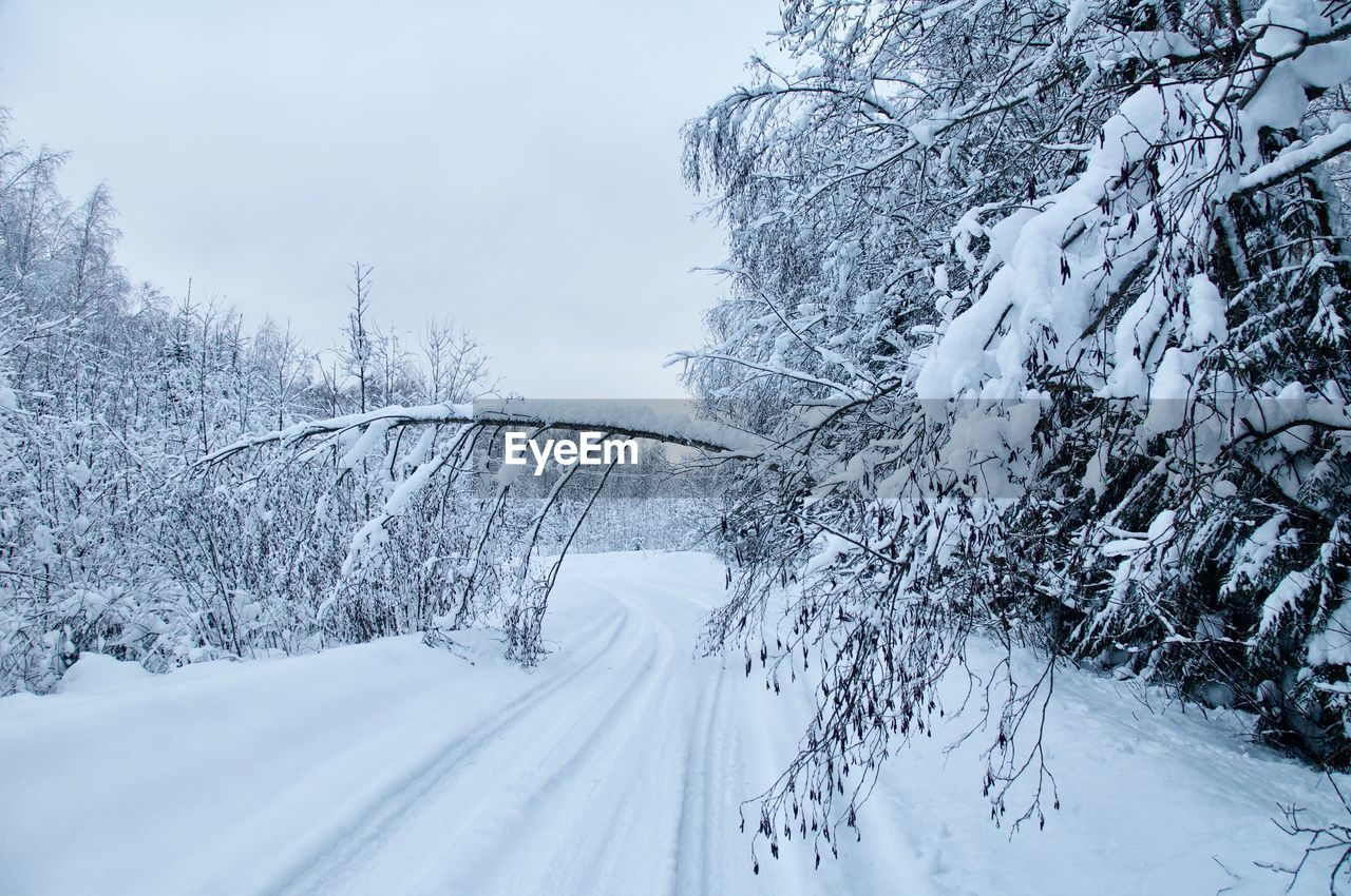 snow, winter, cold temperature, tree, plant, beauty in nature, white color, covering, nature, no people, scenics - nature, day, transportation, sky, tranquil scene, tranquility, road, frozen, bare tree, outdoors, extreme weather, snowcapped mountain