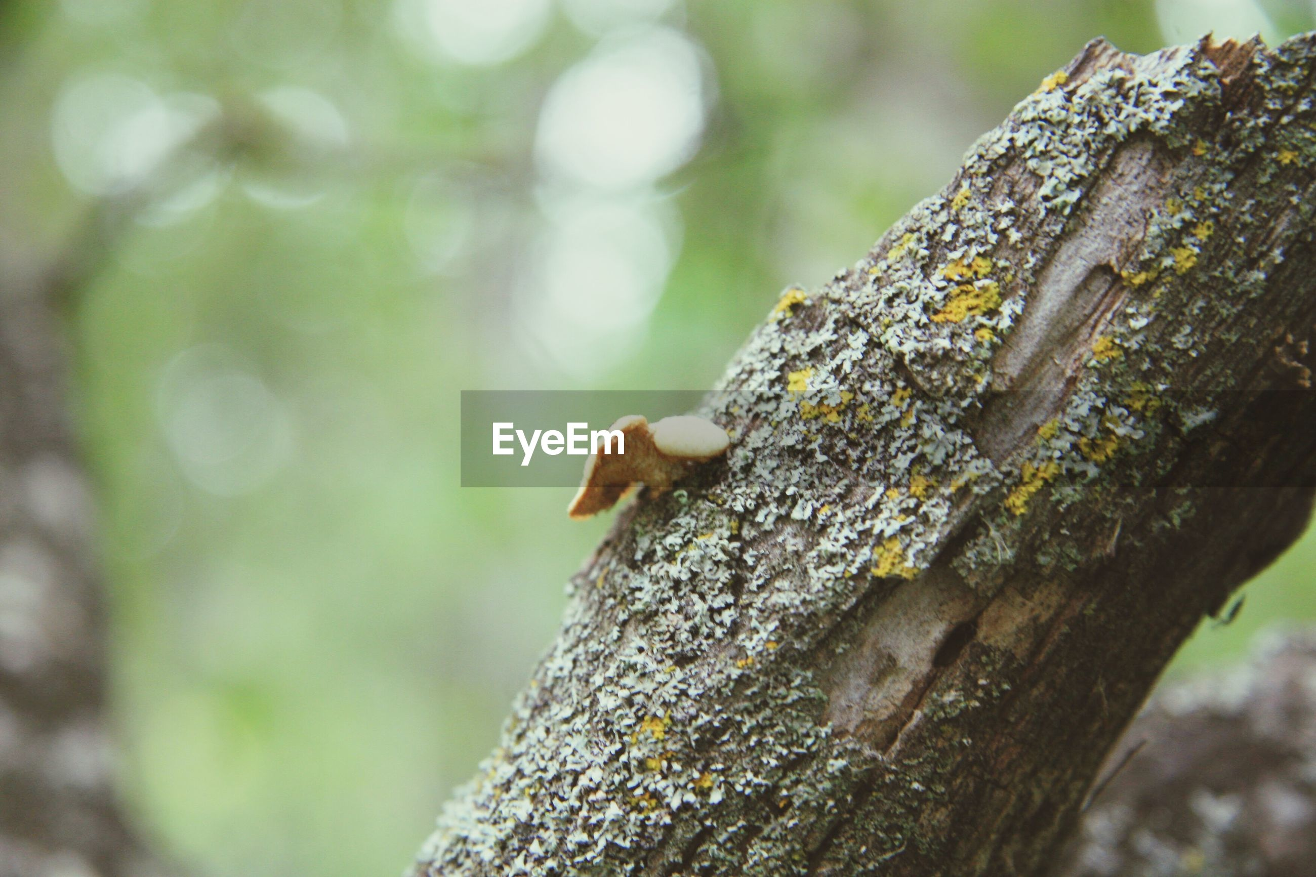 one animal, animal themes, animal wildlife, animals in the wild, nature, tree trunk, no people, tree, outdoors, climbing, day, perching, reptile, close-up, mammal