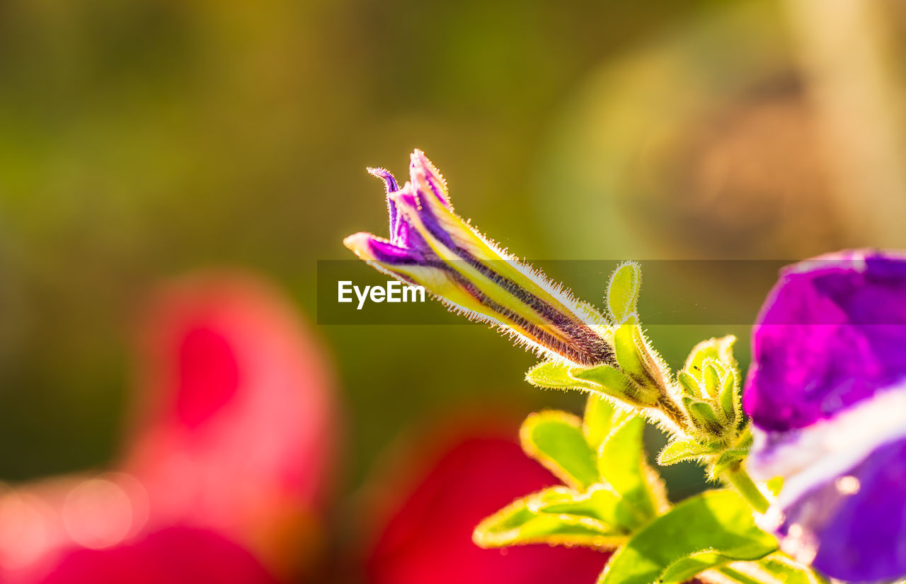 close-up, plant, growth, beauty in nature, invertebrate, flowering plant, flower, insect, vulnerability, fragility, one animal, freshness, selective focus, nature, no people, animal, day, animal wildlife, focus on foreground, leaf, outdoors, flower head, purple