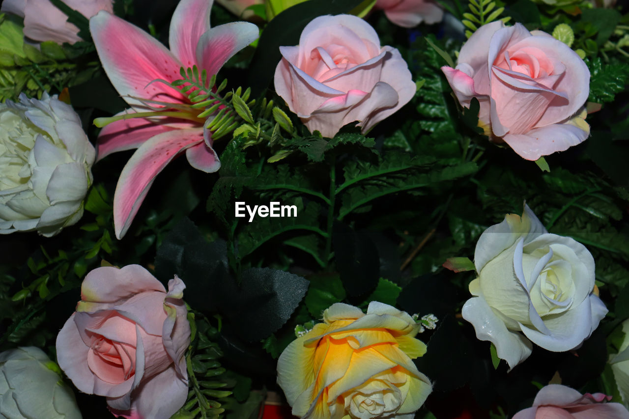 flowering plant, flower, beauty in nature, plant, vulnerability, fragility, rose, freshness, rose - flower, petal, close-up, flower head, inflorescence, nature, pink color, no people, high angle view, choice, flower arrangement, bouquet, outdoors, softness