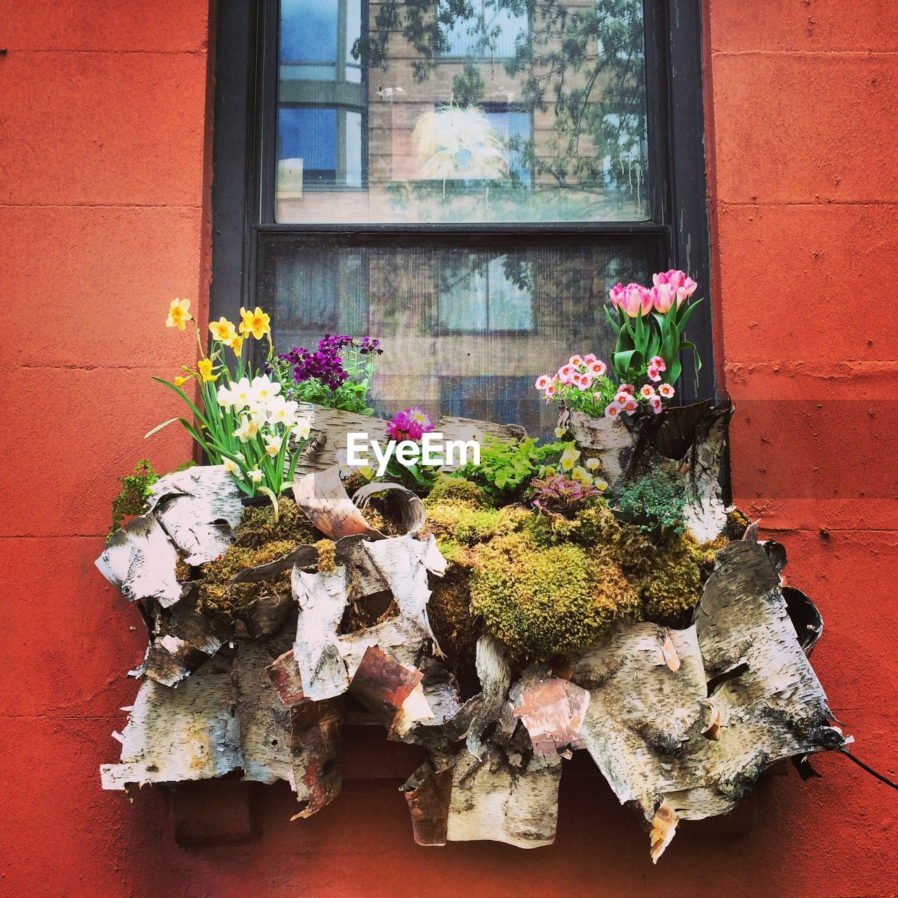 Flowers Blooming On Window Sill