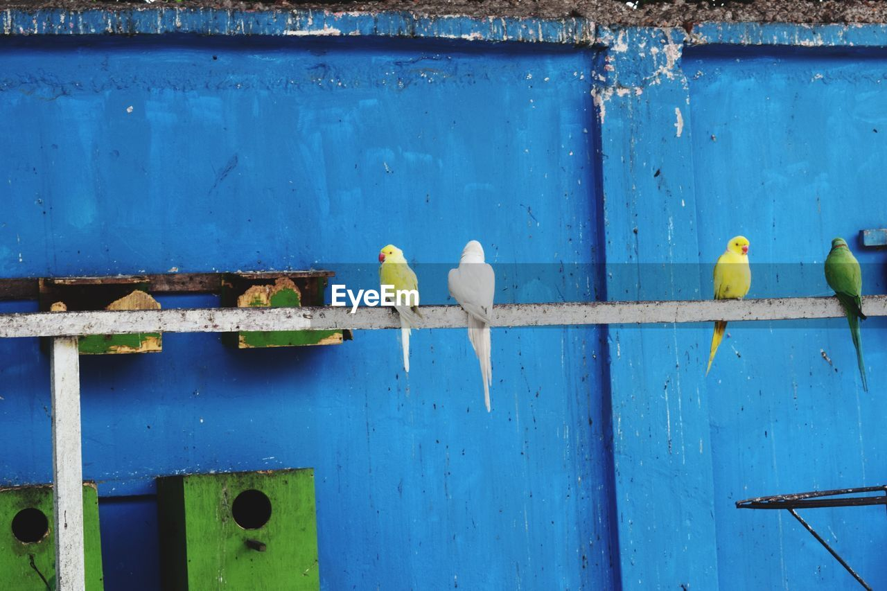 blue, animal themes, bird, animals in the wild, animal wildlife, day, no people, perching, outdoors, architecture, nature