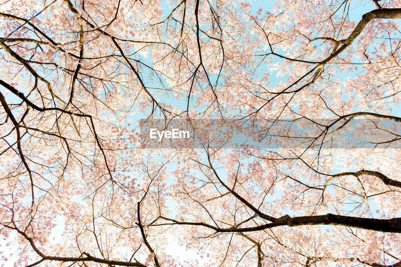 tree, branch, plant, nature, autumn, beauty in nature, no people, low angle view, backgrounds, tranquility, outdoors, scenics - nature, bare tree, land, day, change, sky, full frame, leaf, pink color, tree canopy