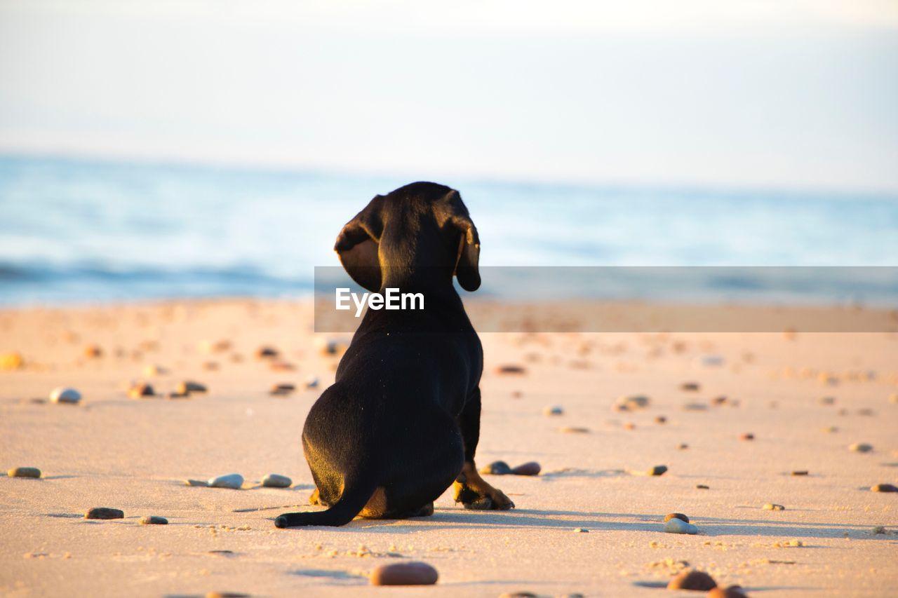 Black dog at beach against sky