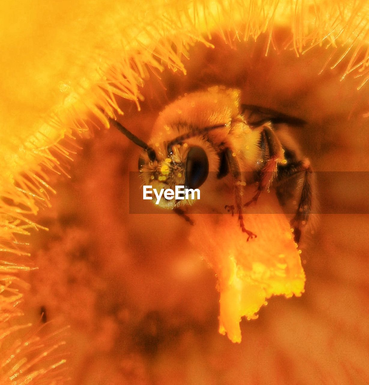 Extreme close-up of bee pollinating on flower