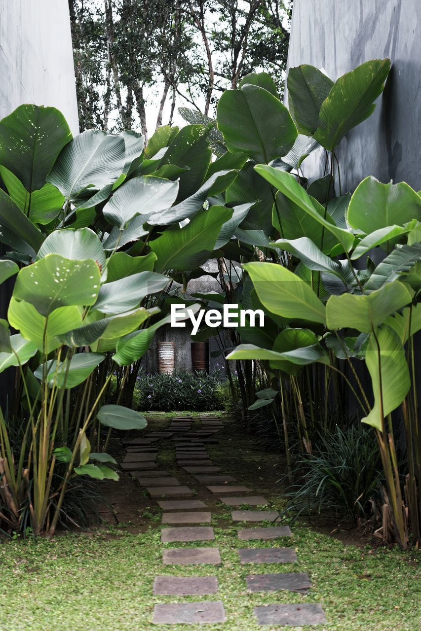 plant, growth, leaf, plant part, no people, nature, beauty in nature, green color, day, tree, outdoors, architecture, direction, flower, front or back yard, banana tree, built structure, the way forward, flowering plant, freshness