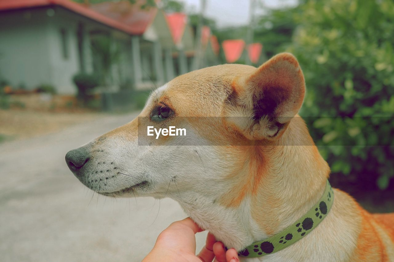 one animal, dog, canine, domestic animals, domestic, pets, animal themes, animal, mammal, vertebrate, human hand, focus on foreground, real people, human body part, hand, one person, looking, close-up, unrecognizable person, animal body part, body part, animal head, finger, profile view, human limb