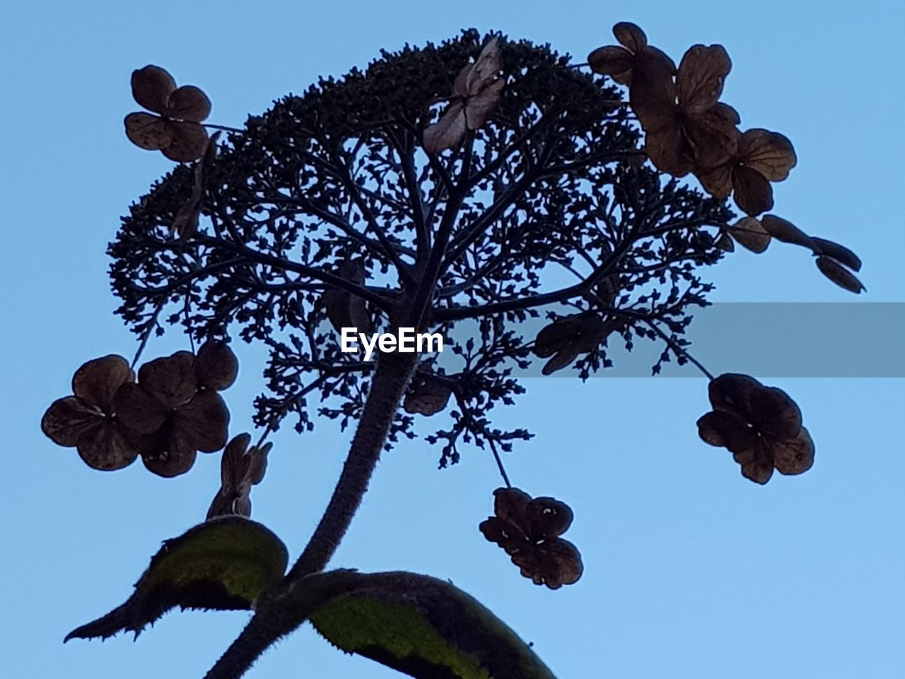 low angle view, plant, tree, sky, no people, nature, flower, growth, flowering plant, beauty in nature, day, branch, leaf, plant part, outdoors, freshness, clear sky, blue, tranquility, botany