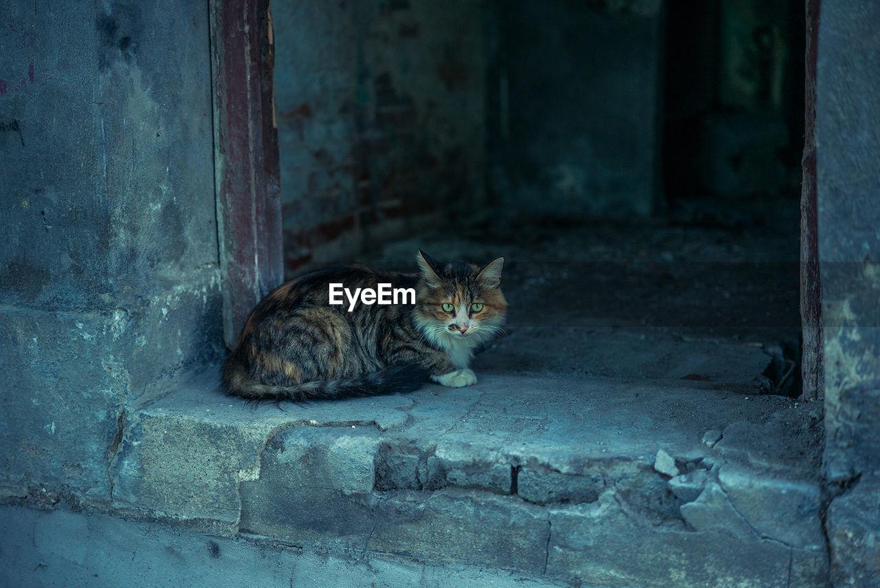 Cat sitting at doorway