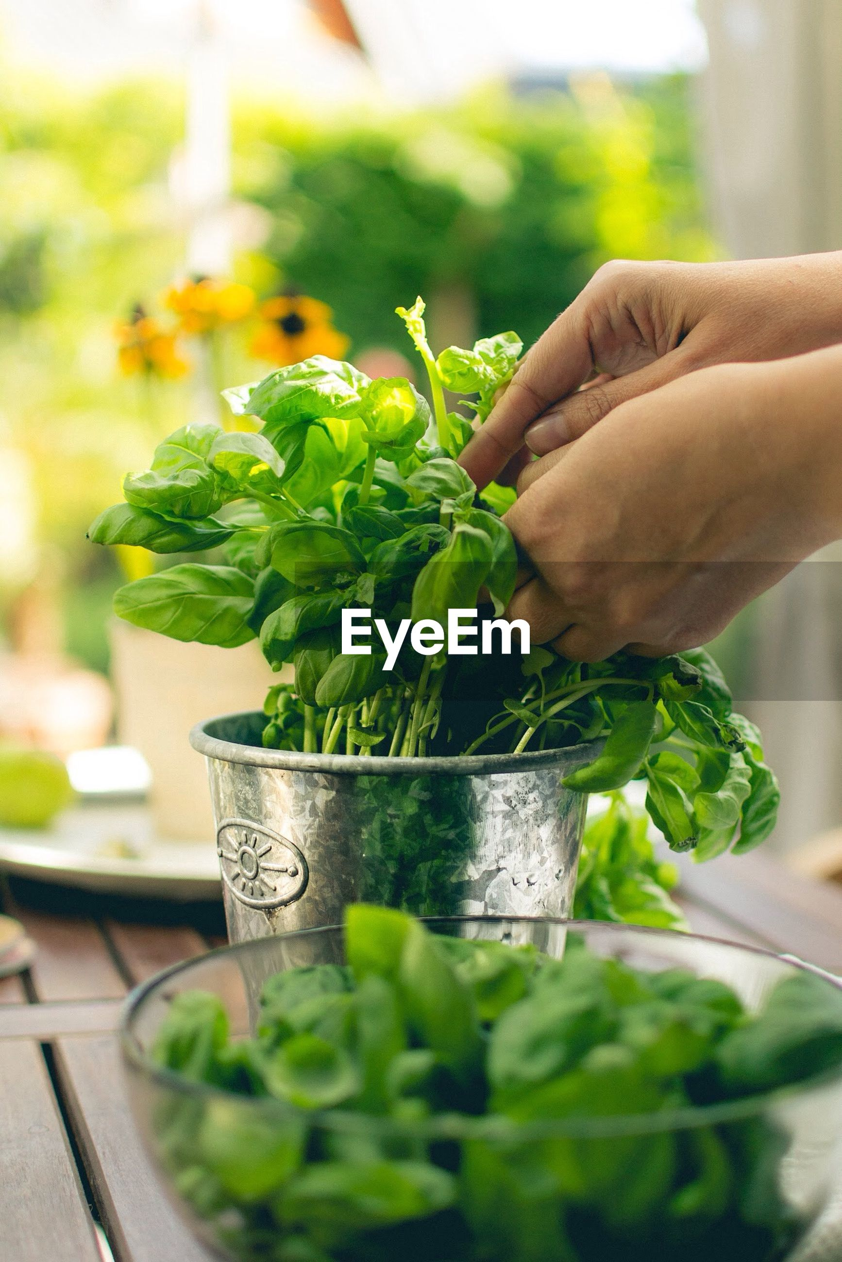 Cropped image on woman holding leafy vegetable in kitchen