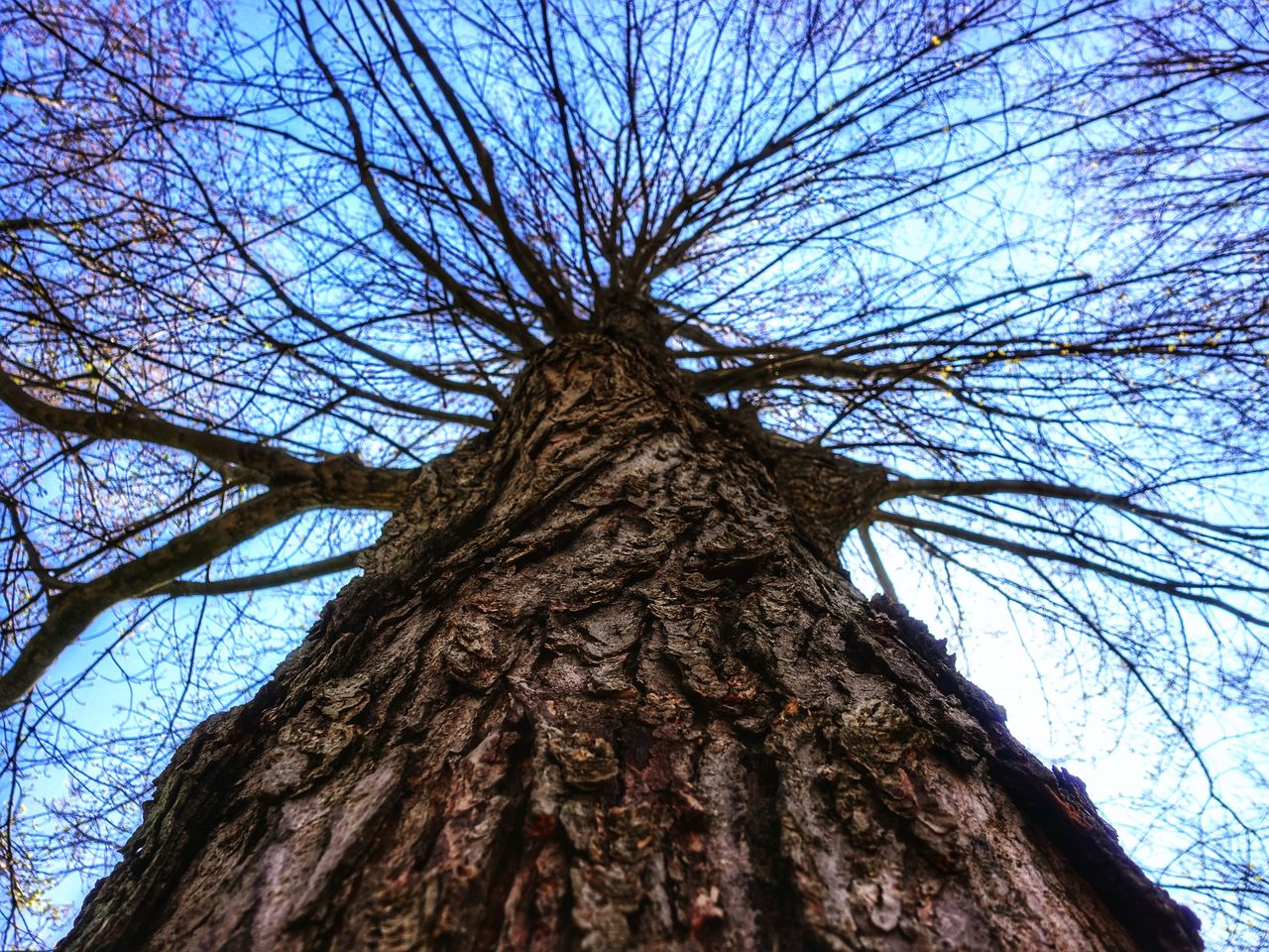 tree, plant, bare tree, trunk, branch, tree trunk, low angle view, sky, nature, no people, bark, day, textured, tranquility, growth, backgrounds, outdoors, tall - high, directly below, beauty in nature, tree canopy