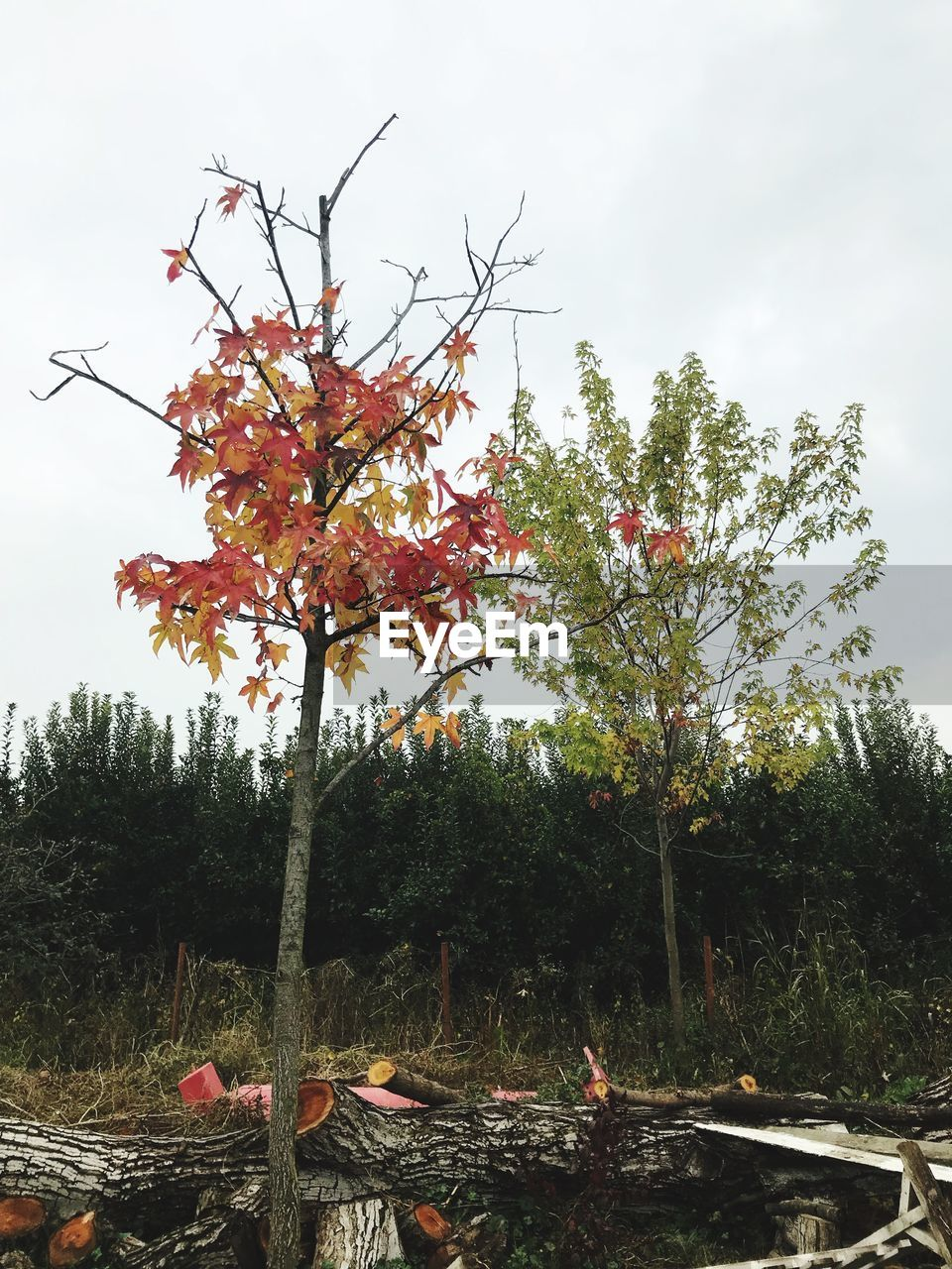 tree, growth, nature, no people, outdoors, day, beauty in nature, autumn, low angle view, leaf, branch, sky