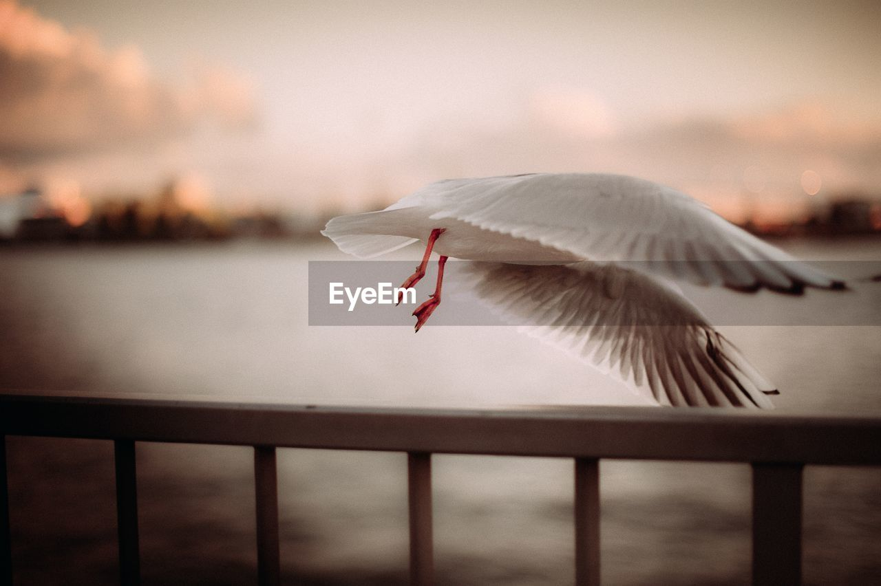 sky, flying, animal, water, vertebrate, spread wings, bird, animal themes, railing, animals in the wild, animal wildlife, focus on foreground, one animal, sunset, nature, cloud - sky, beauty in nature, no people, outdoors, seagull