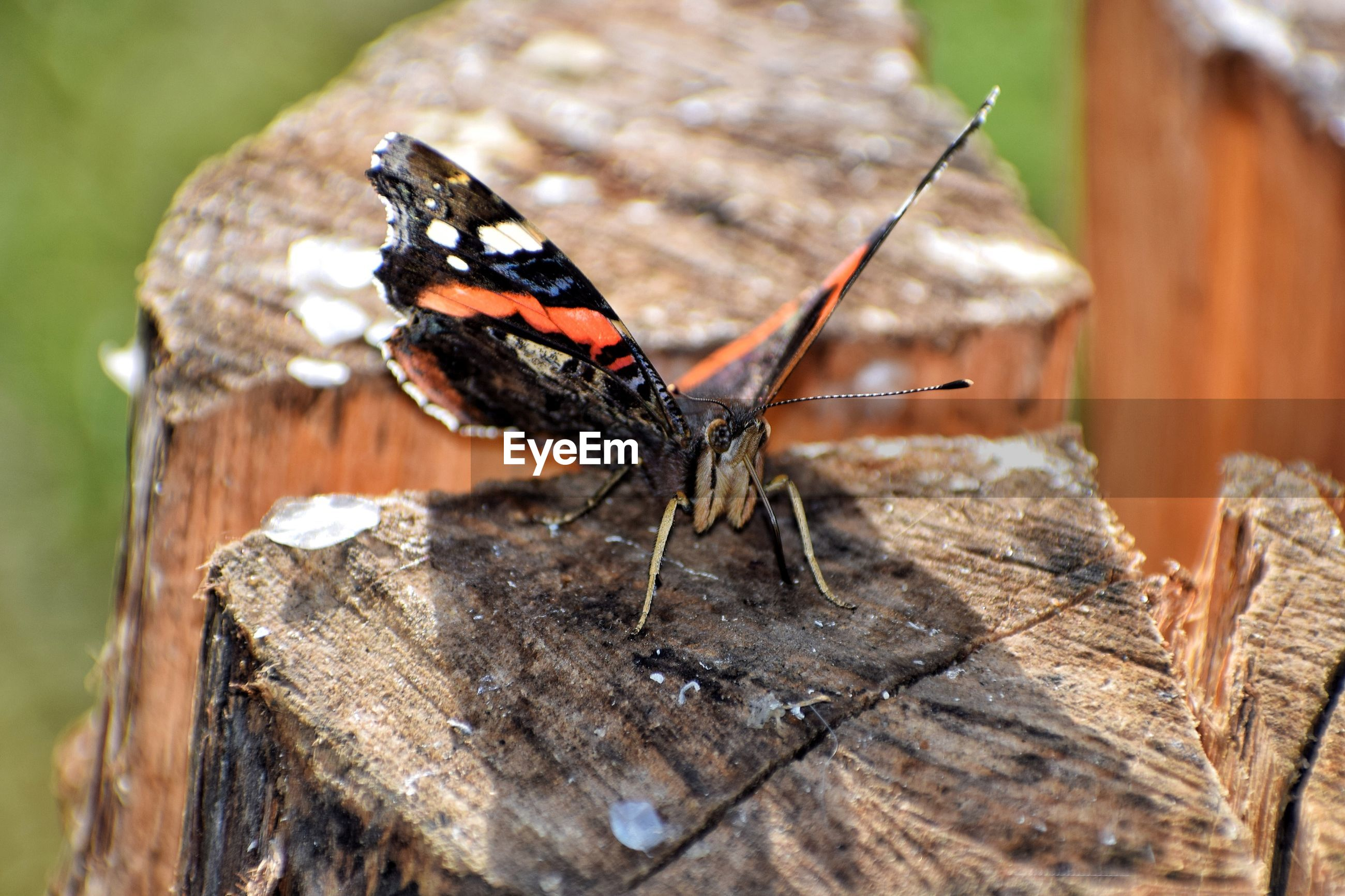Close-up of butterfly on tree trunk
