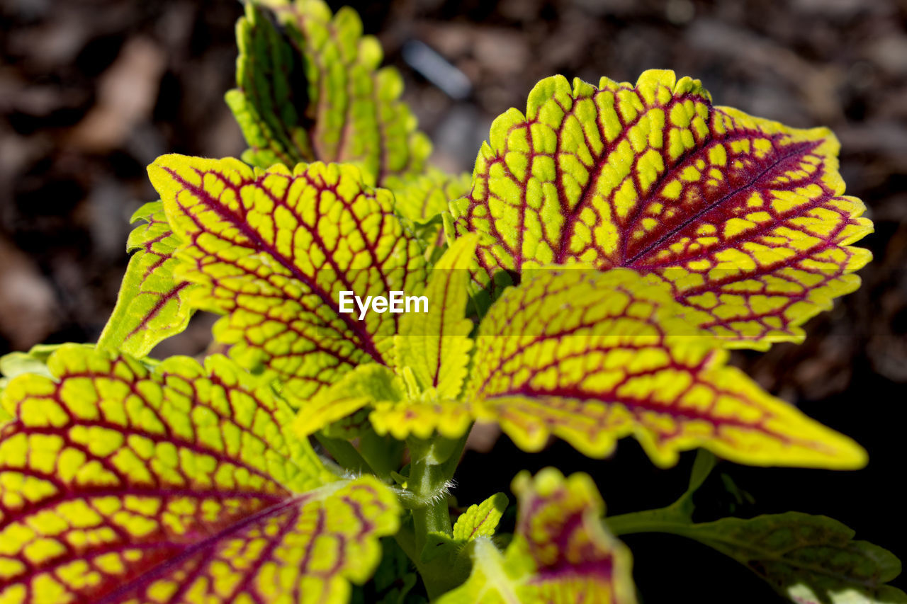 close-up, growth, plant, beauty in nature, focus on foreground, leaf, plant part, no people, nature, yellow, natural pattern, day, green color, vulnerability, selective focus, fragility, freshness, flower, flowering plant, outdoors, flower head, leaves