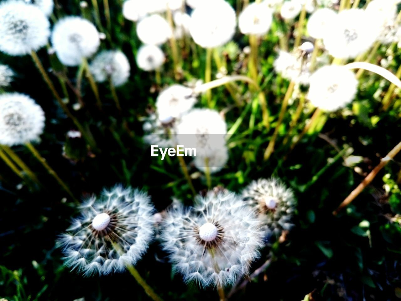 nature, flower, plant, growth, fragility, beauty in nature, day, no people, outdoors, flower head, close-up, freshness