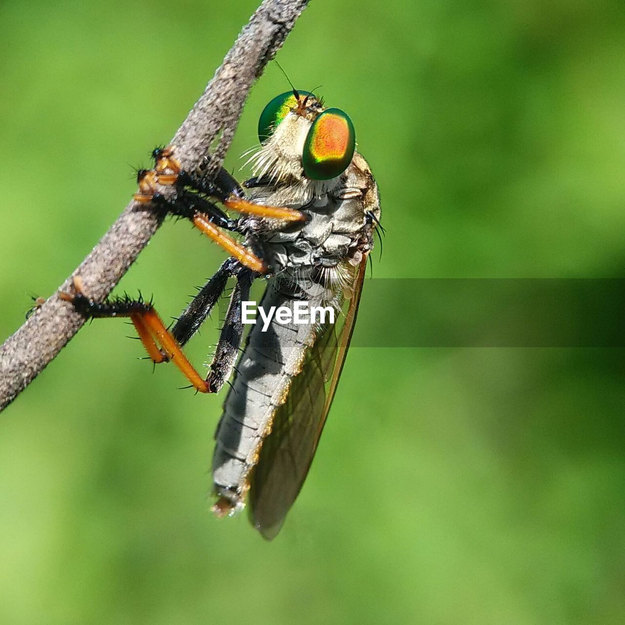 animals in the wild, animal themes, one animal, insect, animal wildlife, no people, day, focus on foreground, outdoors, green color, nature, close-up