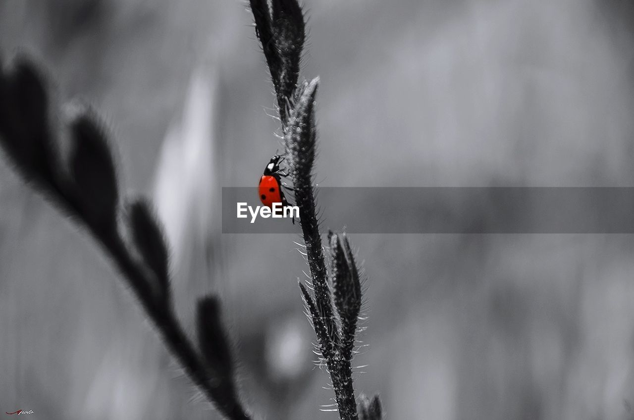 ladybug, insect, animals in the wild, red, one animal, animal themes, tiny, nature, day, animal wildlife, outdoors, no people, close-up