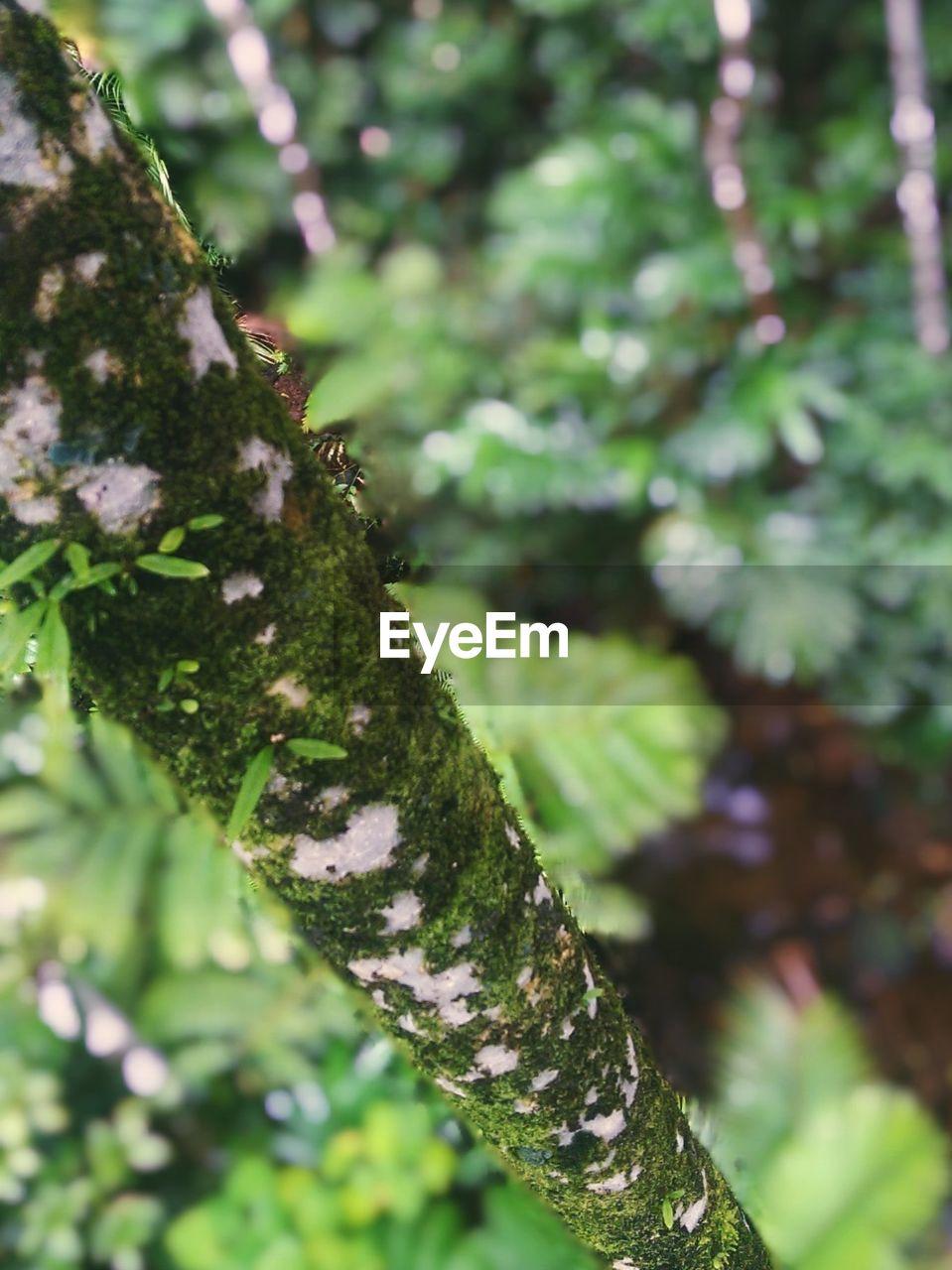 Moss Overgrowing Tree Trunk