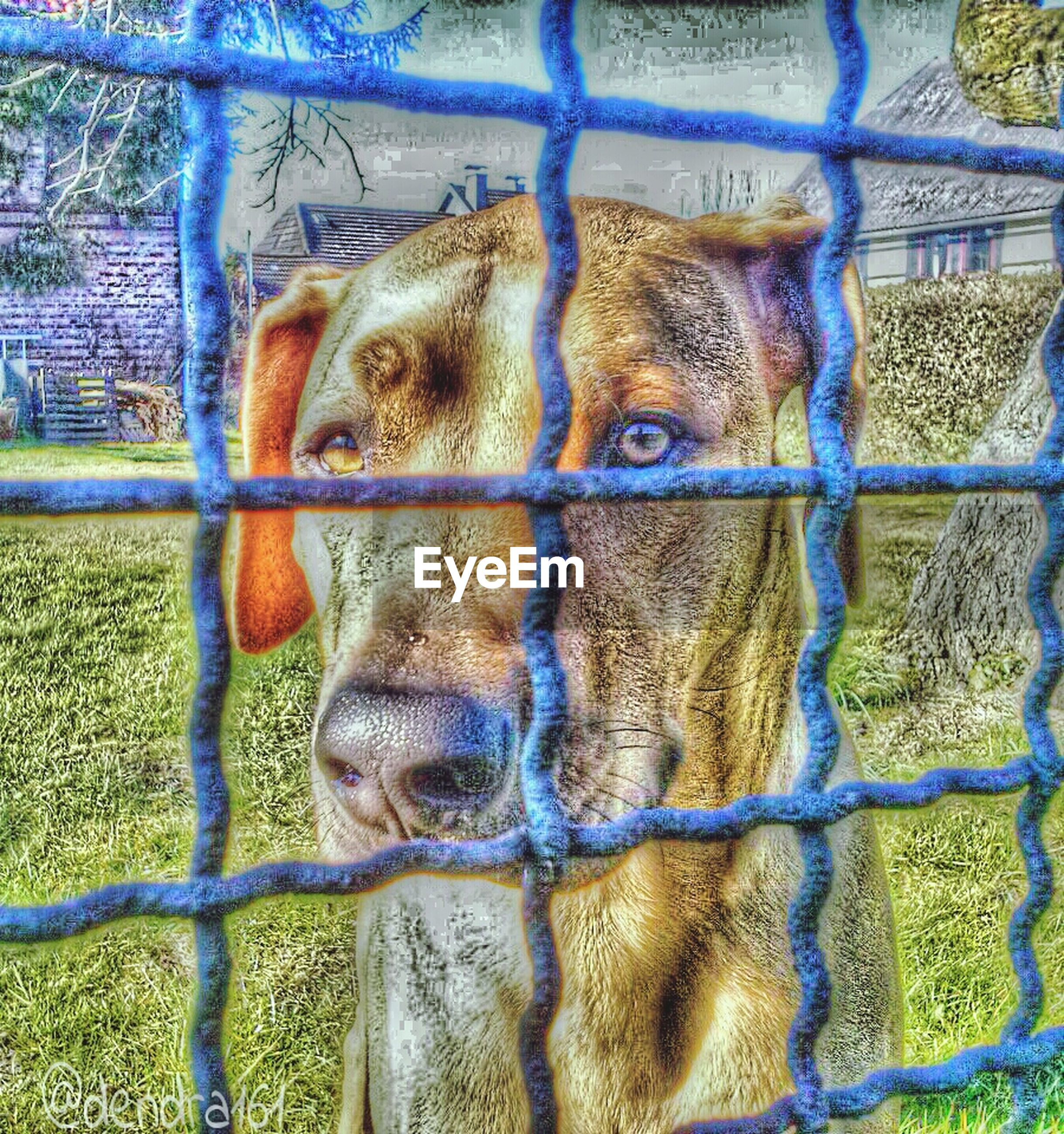 animal themes, one animal, mammal, fence, domestic animals, animals in captivity, cage, portrait, looking at camera, chainlink fence, wildlife, animal head, close-up, pets, animals in the wild, zoo, no people, day, zoology, full frame