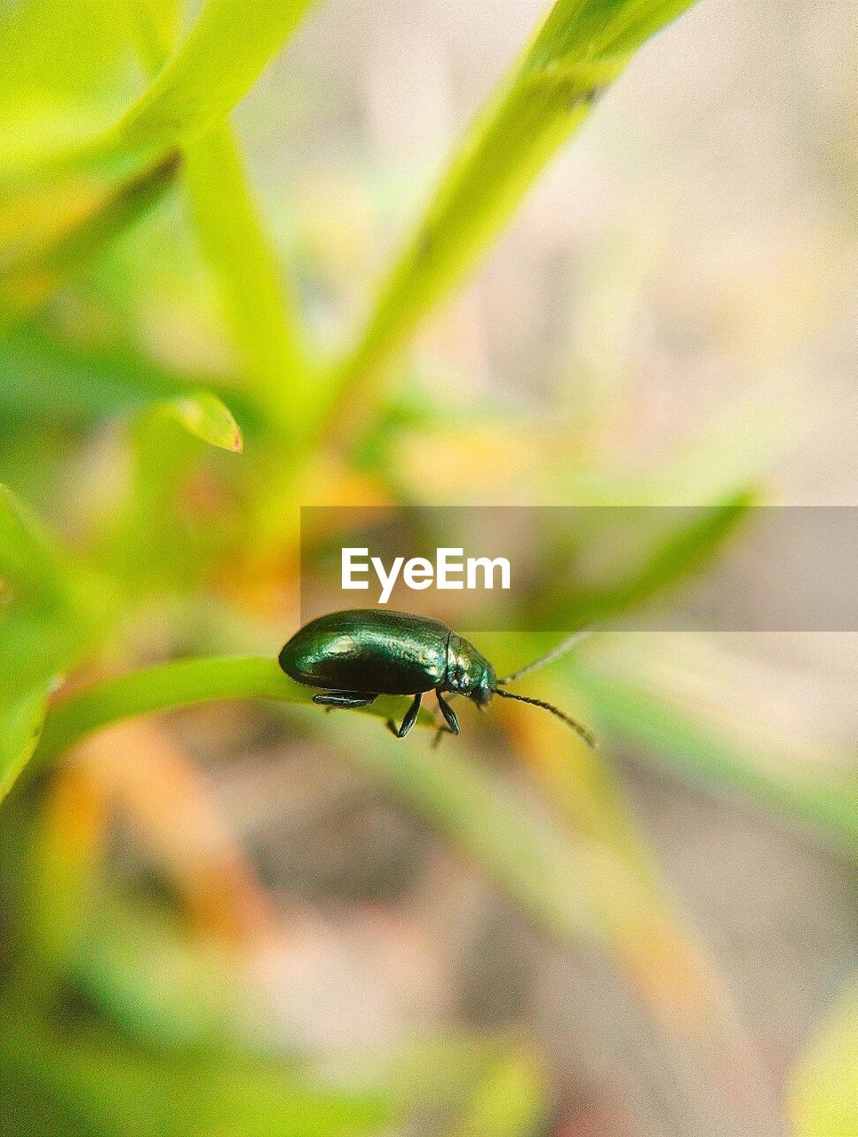 invertebrate, one animal, insect, animal themes, animals in the wild, animal, animal wildlife, close-up, plant, day, nature, no people, selective focus, focus on foreground, growth, green color, outdoors, beauty in nature, zoology, plant part, blade of grass