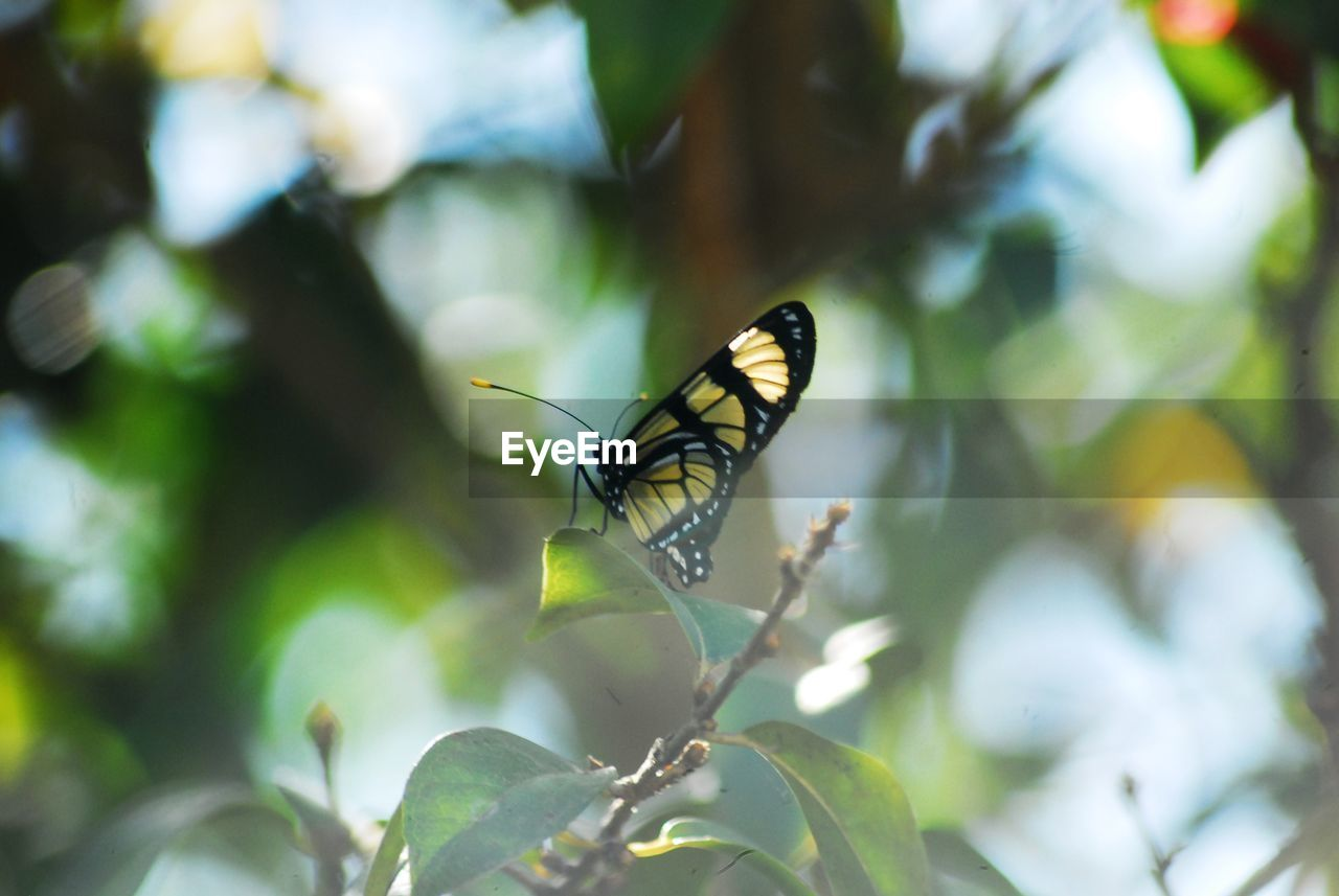 insect, invertebrate, animals in the wild, animal wildlife, animal themes, animal, one animal, beauty in nature, plant, animal wing, close-up, focus on foreground, day, no people, plant part, butterfly - insect, leaf, nature, growth, flower, outdoors, pollination, butterfly