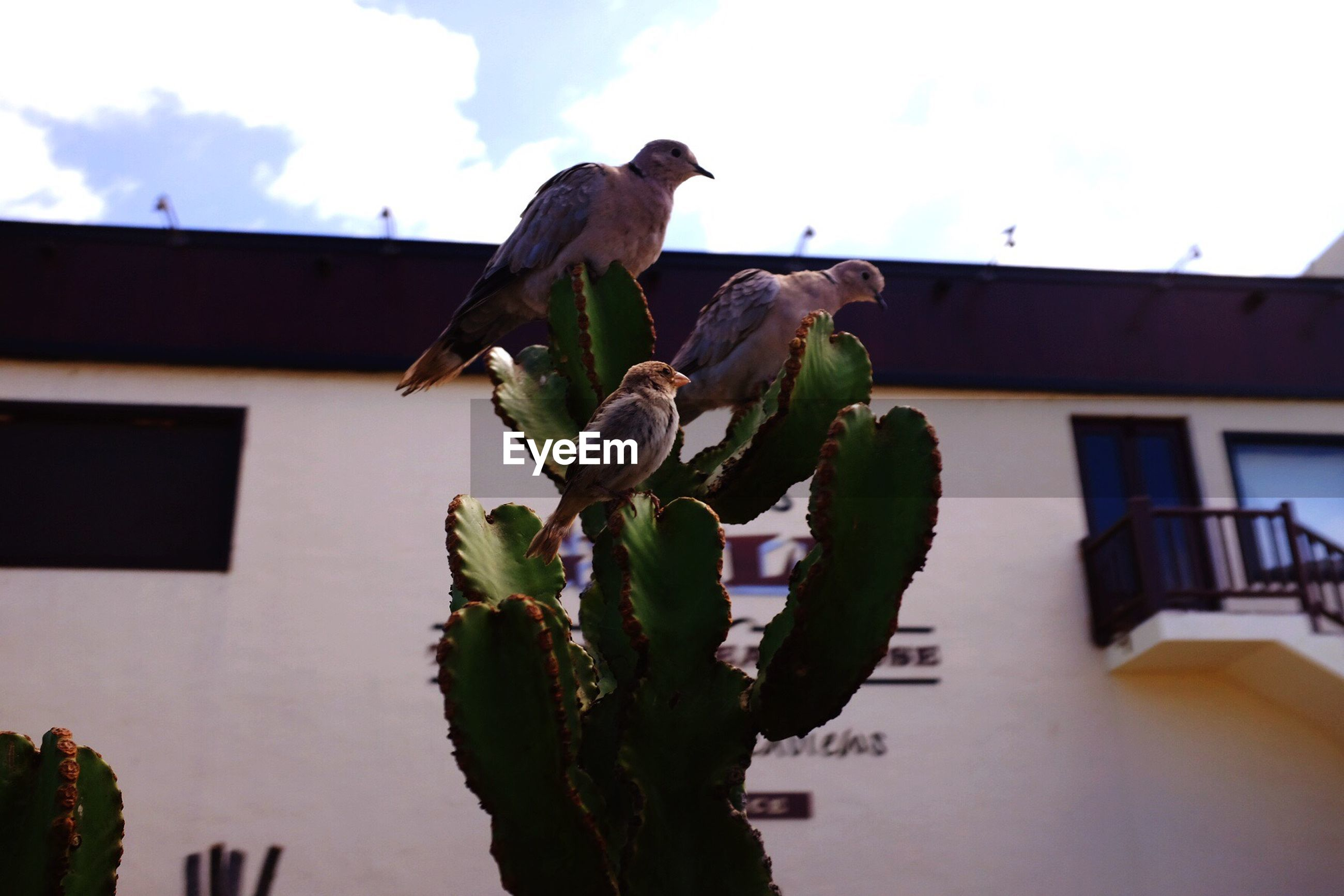 LOW ANGLE VIEW OF BIRDS PERCHING ON WALL