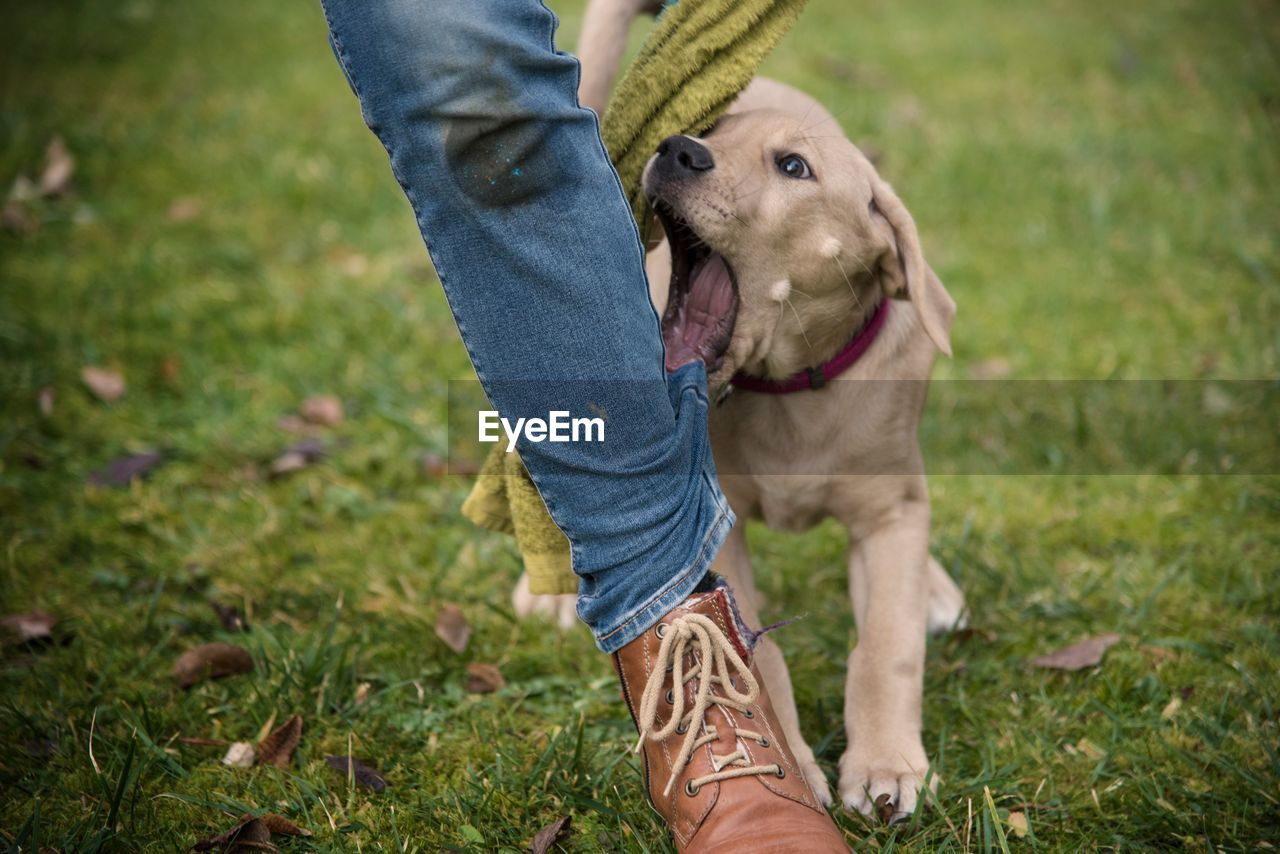 one animal, animal themes, domestic, mammal, pets, one person, low section, grass, animal, casual clothing, domestic animals, human body part, dog, canine, jeans, plant, human leg, body part, day, field, pet owner, outdoors, rubber boot, human limb