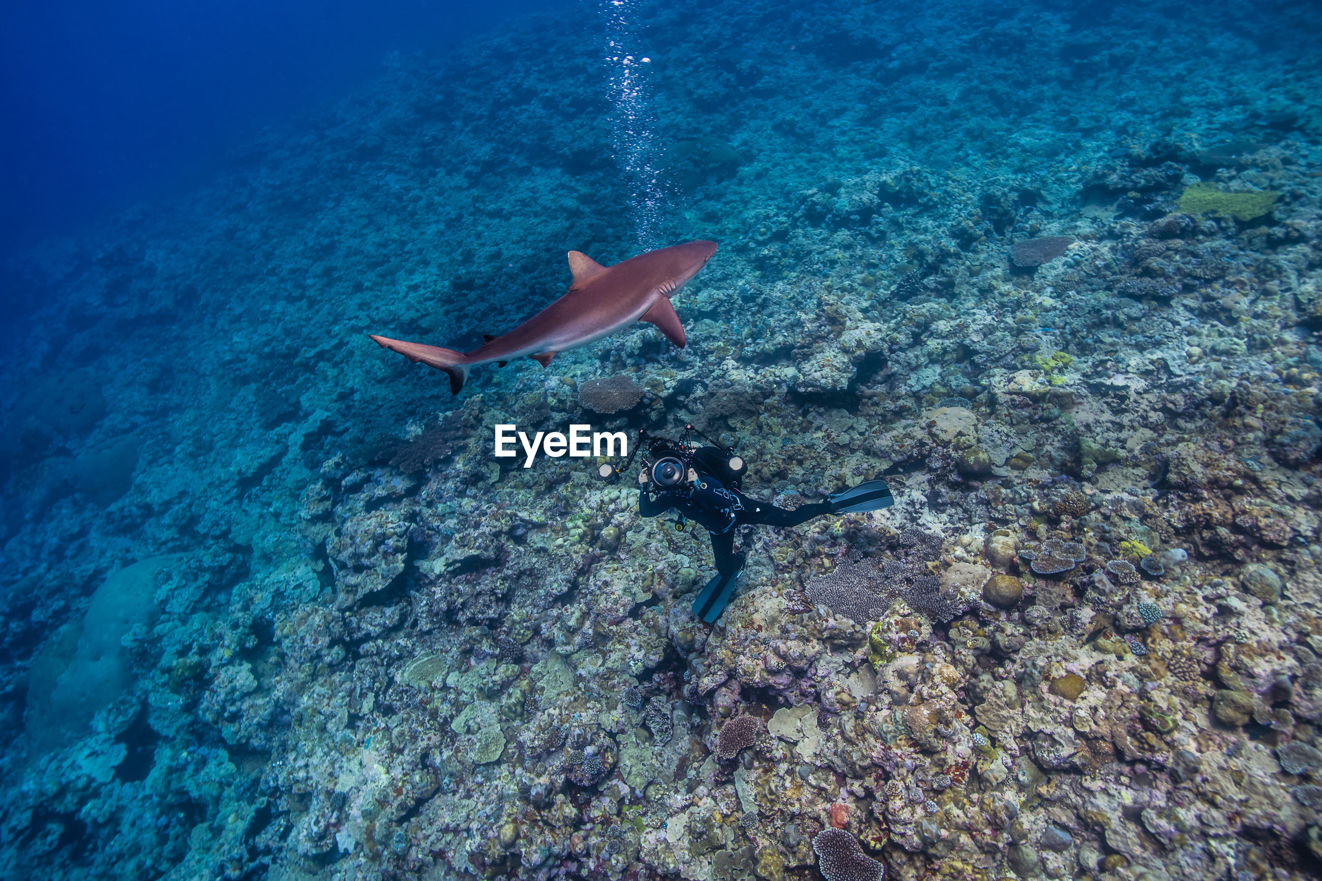 High angle view of scuba diver and a shark underwater