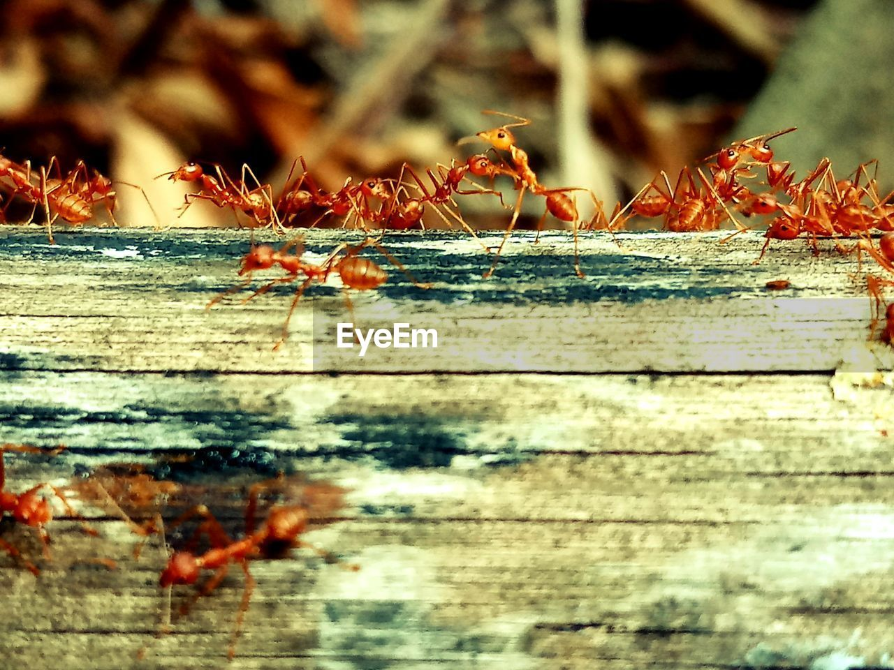 selective focus, close-up, wood - material, day, no people, invertebrate, nature, animals in the wild, insect, animal, outdoors, animal themes, focus on foreground, animal wildlife, group of animals, plant, tree, wood, sunlight, ant