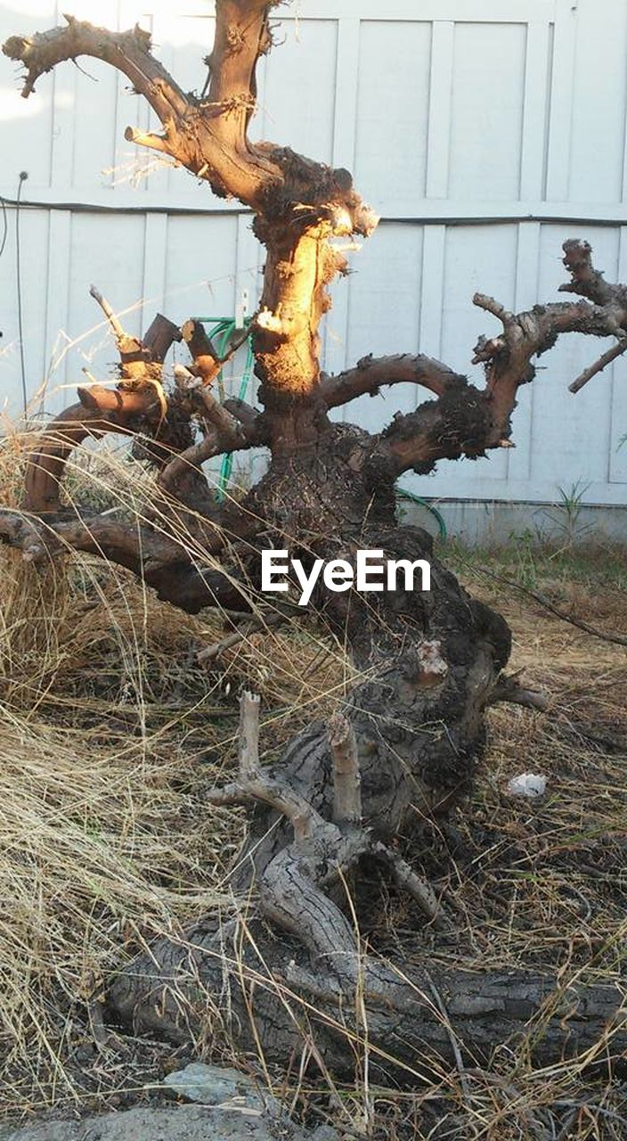 no people, dead plant, growth, day, plant, nature, outdoors, branch, dead tree, tree, close-up