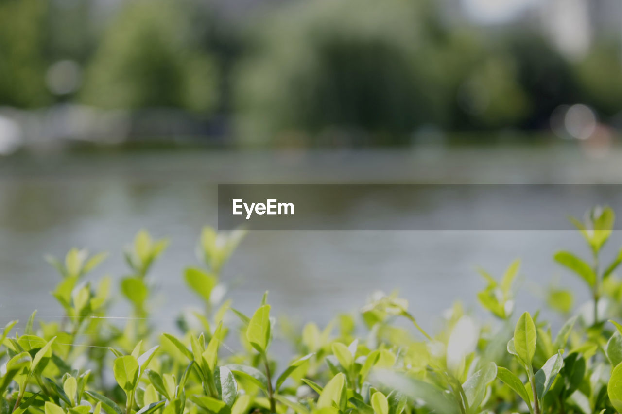 plant, growth, nature, beauty in nature, green color, leaf, plant part, no people, day, water, tranquility, outdoors, focus on foreground, land, selective focus, freshness, field, lake, tranquil scene