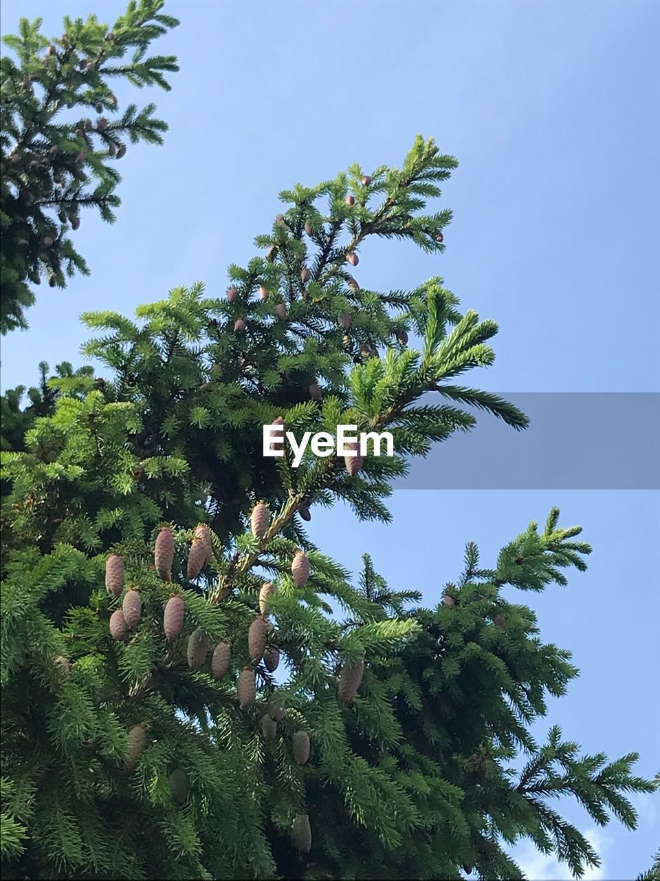 plant, tree, growth, sky, low angle view, green color, nature, beauty in nature, day, no people, clear sky, leaf, tranquility, plant part, palm tree, branch, tropical climate, outdoors, freshness, food