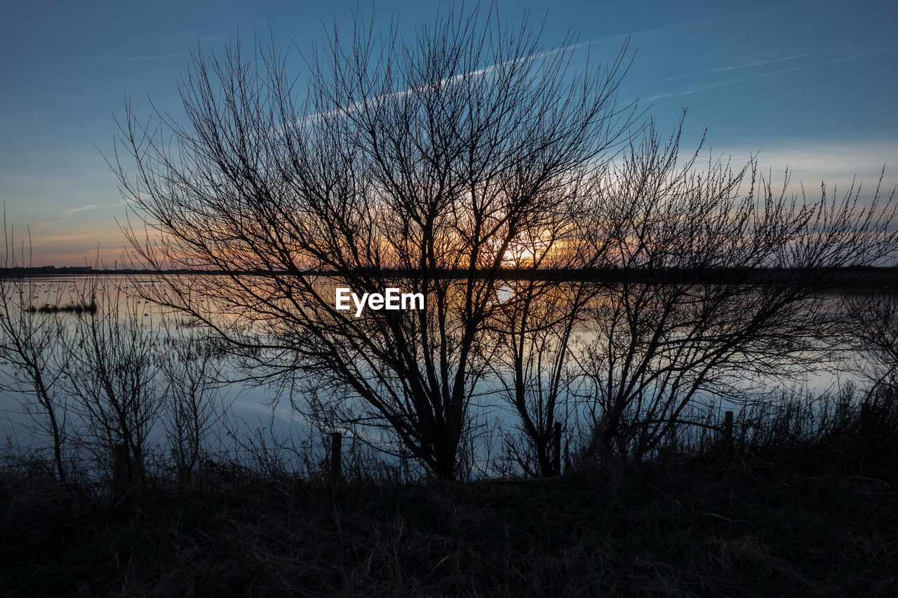 Silhouette bare trees by river against sky during sunset