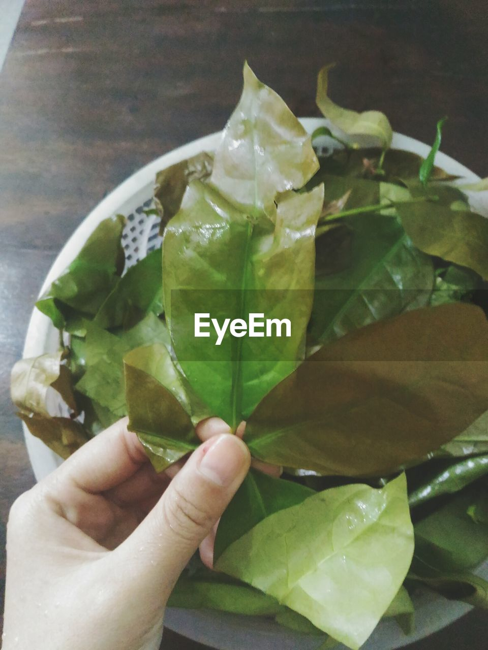 human hand, leaf, human body part, food and drink, human finger, close-up, holding, green color, freshness, one person, real people, food, healthy eating, outdoors, day, ready-to-eat, people