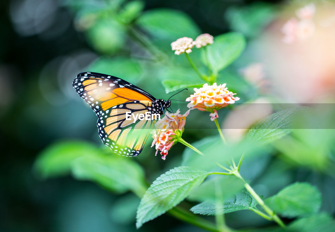 Close-up of butterfly pollinating on leaf
