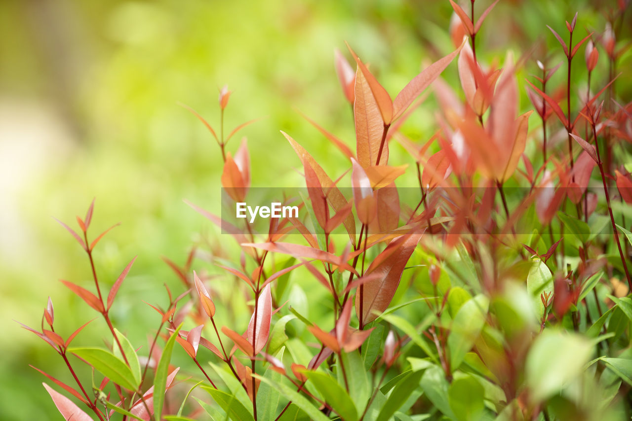 growth, plant, beauty in nature, selective focus, green color, nature, close-up, day, no people, freshness, plant part, flower, land, fragility, vulnerability, field, leaf, tranquility, flowering plant, outdoors, flower head