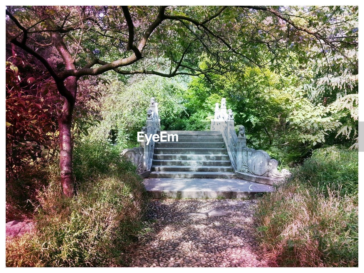 tree, steps, staircase, steps and staircases, stairs, nature, forest, day, outdoors, no people, branch, landscape, beauty in nature