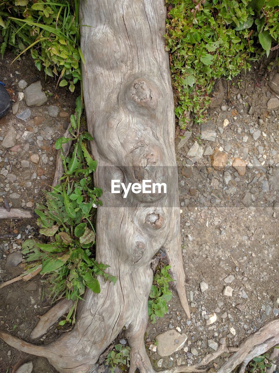 tree trunk, growth, tree, nature, no people, outdoors, day, plant, bark, textured, close-up