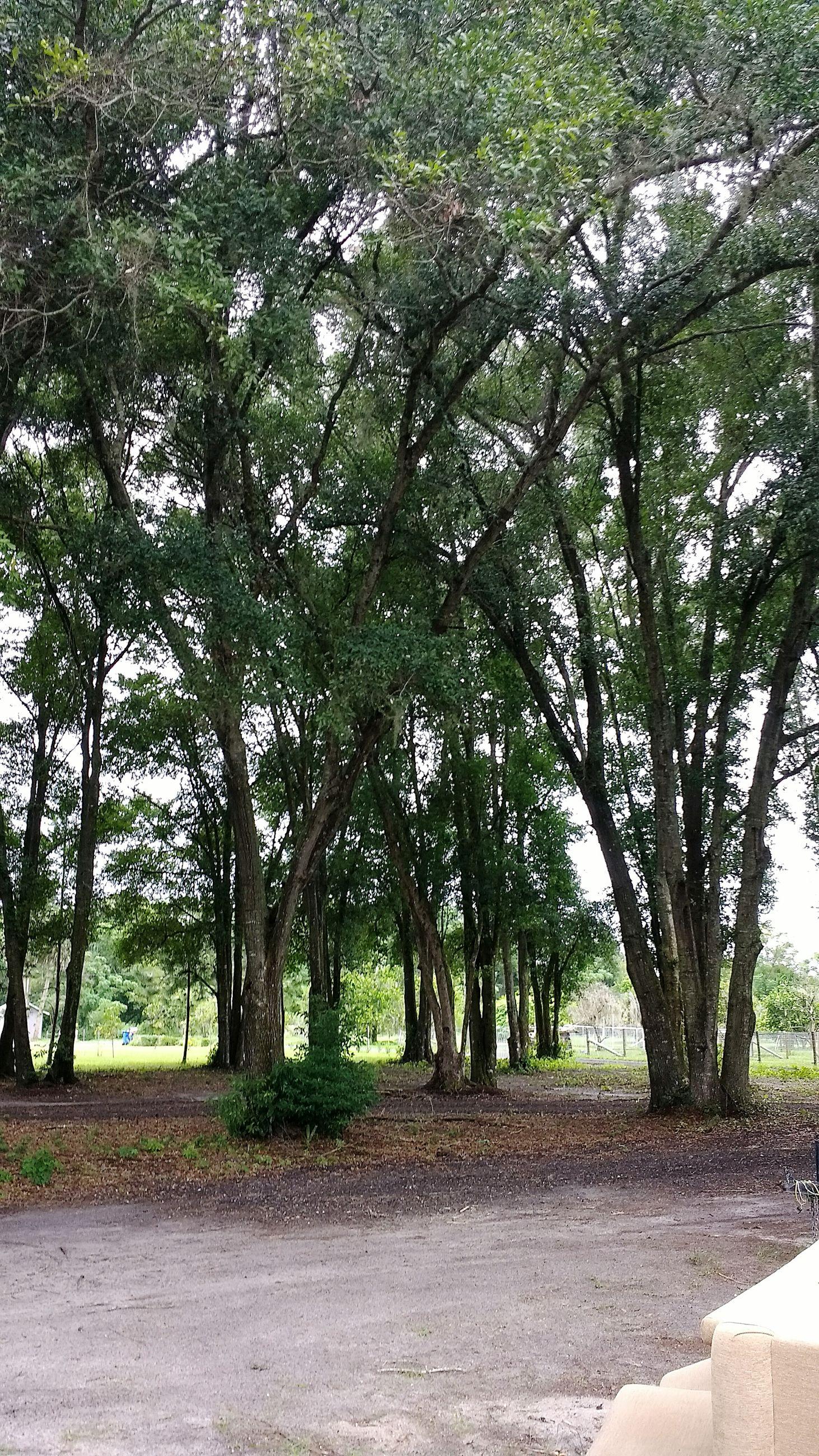 TREES ON ROAD ALONG LANDSCAPE